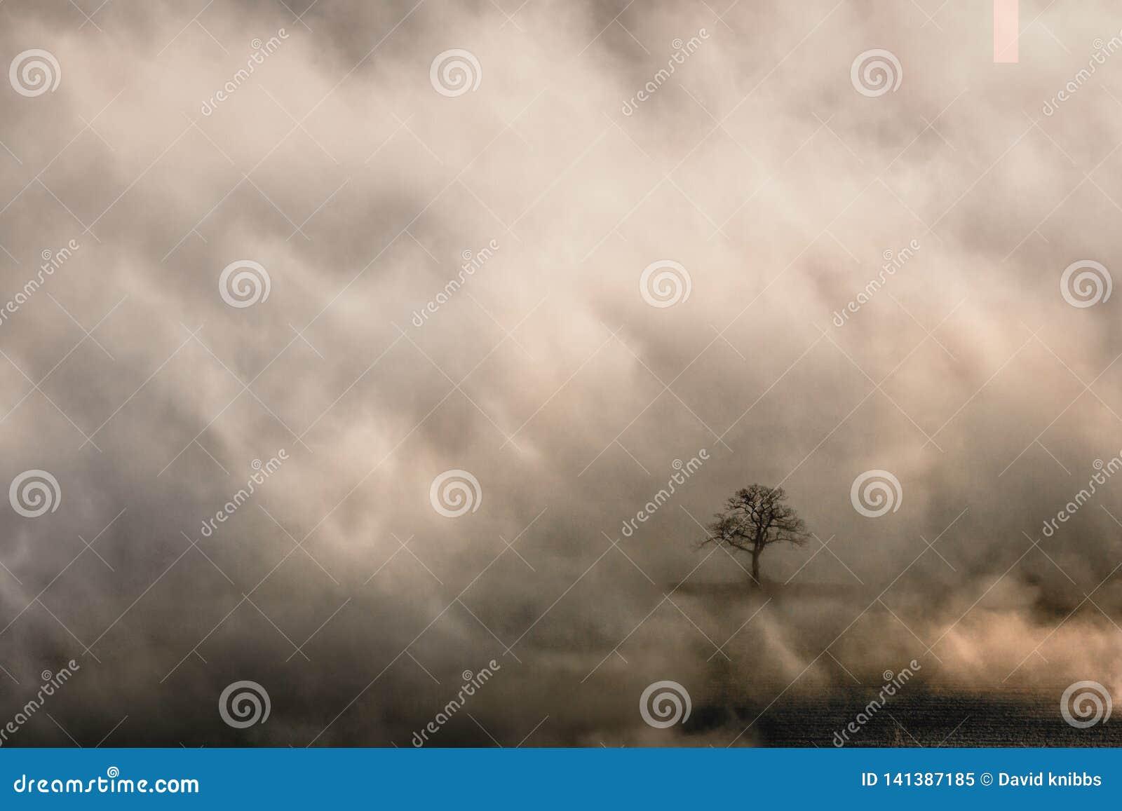 Samotny drzewo w otwarciu w wczesny poranek mgle w Malvern wzgórzach