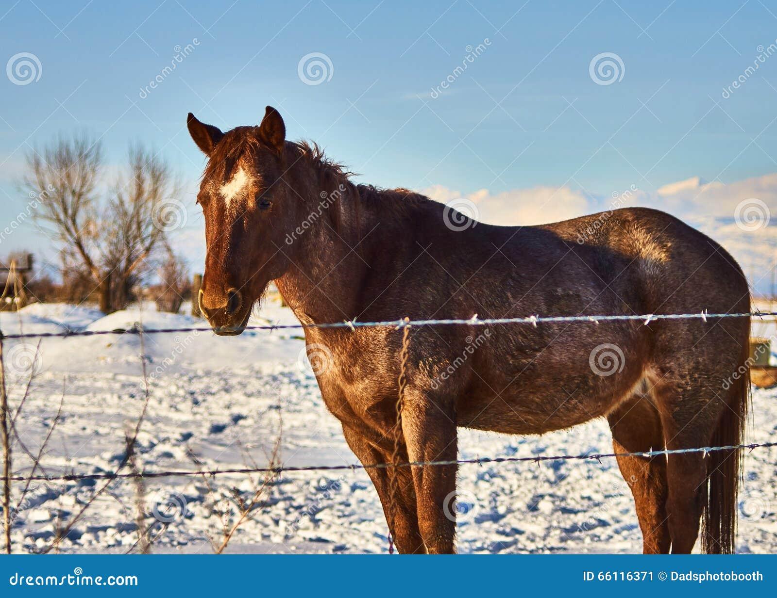 Samotny koń