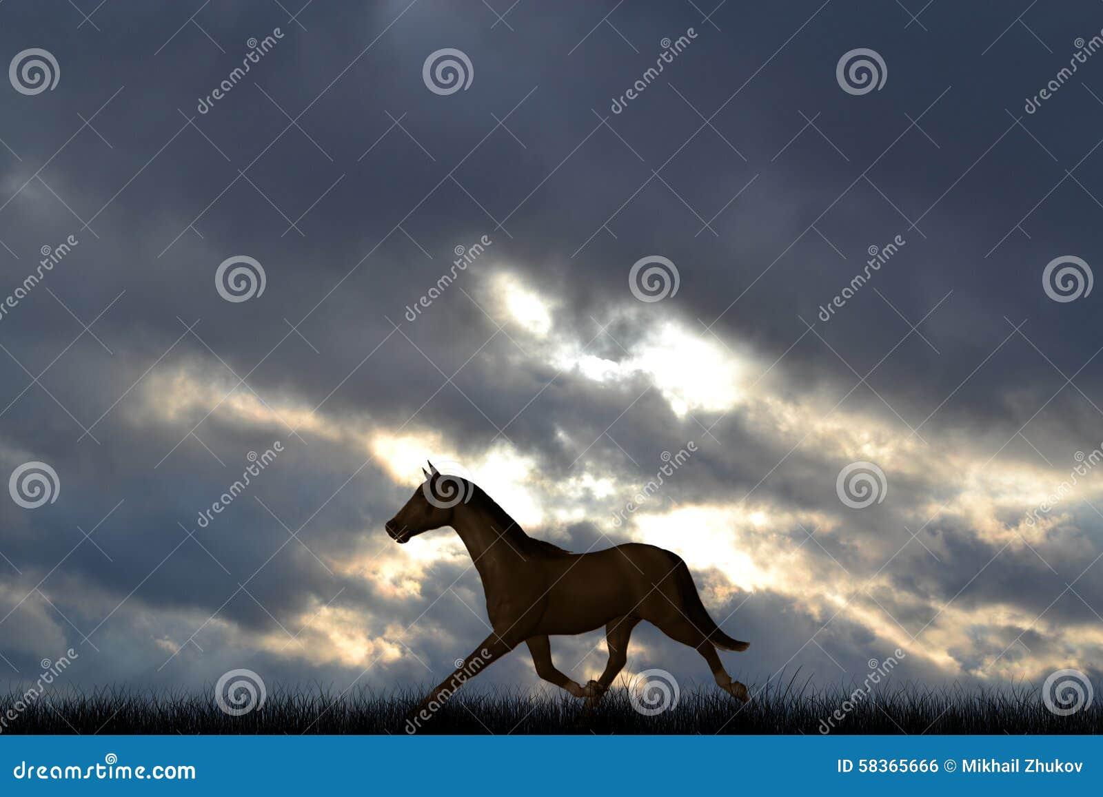 Samotny koń w łące