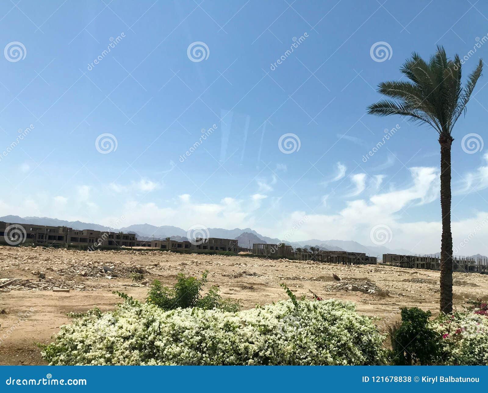 Samotny tropikalny drzewko palmowe w pustyni pod otwartym niebem na wakacje, tropikalny, południowy, ciepły kurort pod słońcem w