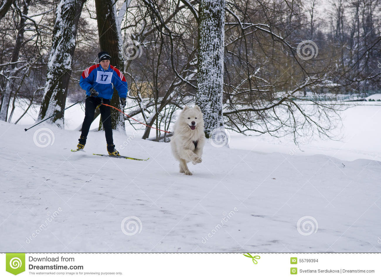 Skijoring With  Dogs