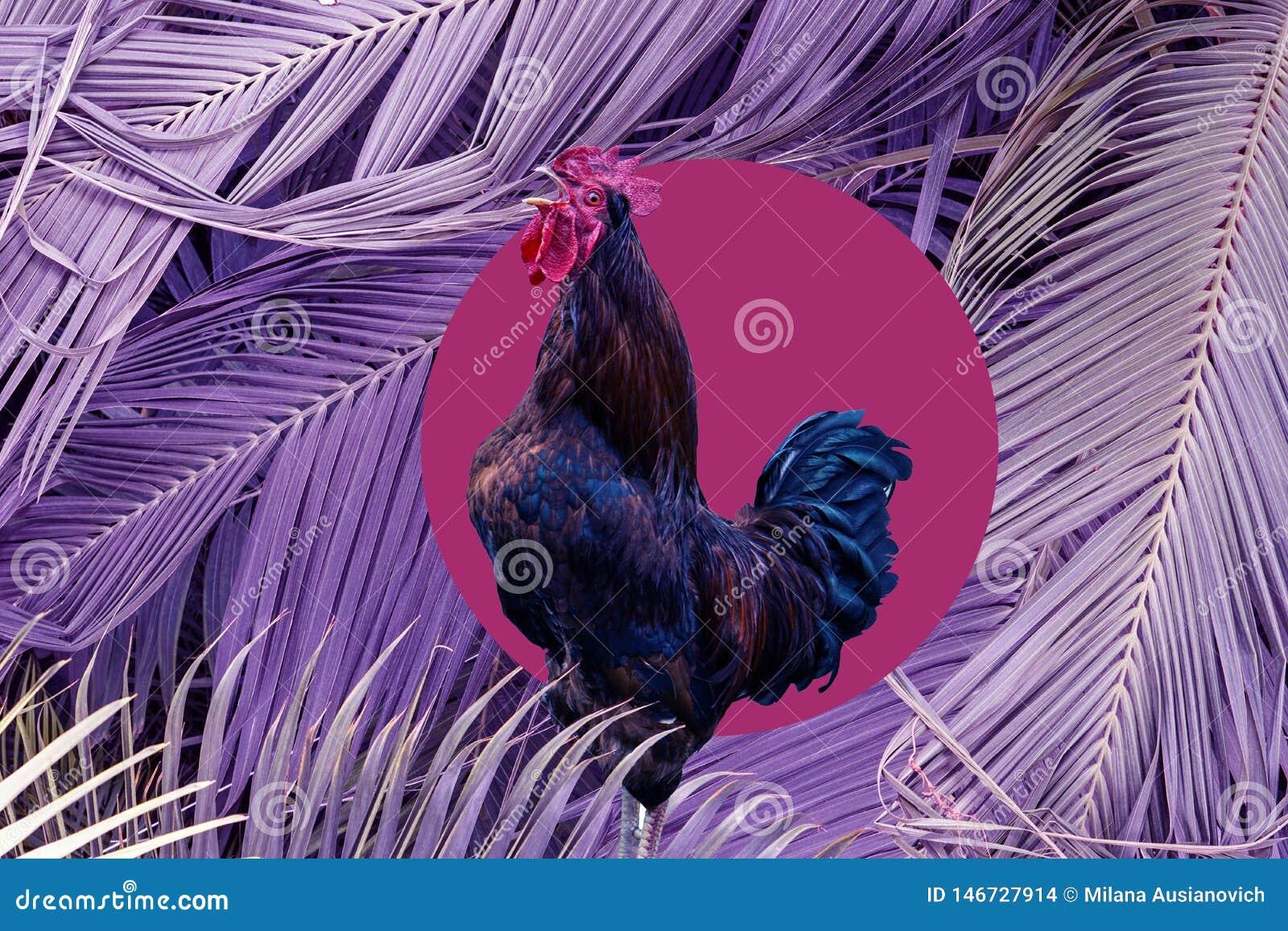 Samtida konstcollage som sjunger hanen i purpurf?rgad stor palmbladbakgrund Modernt begrepp f?r kultur f?r zine f?r stilpopkonst