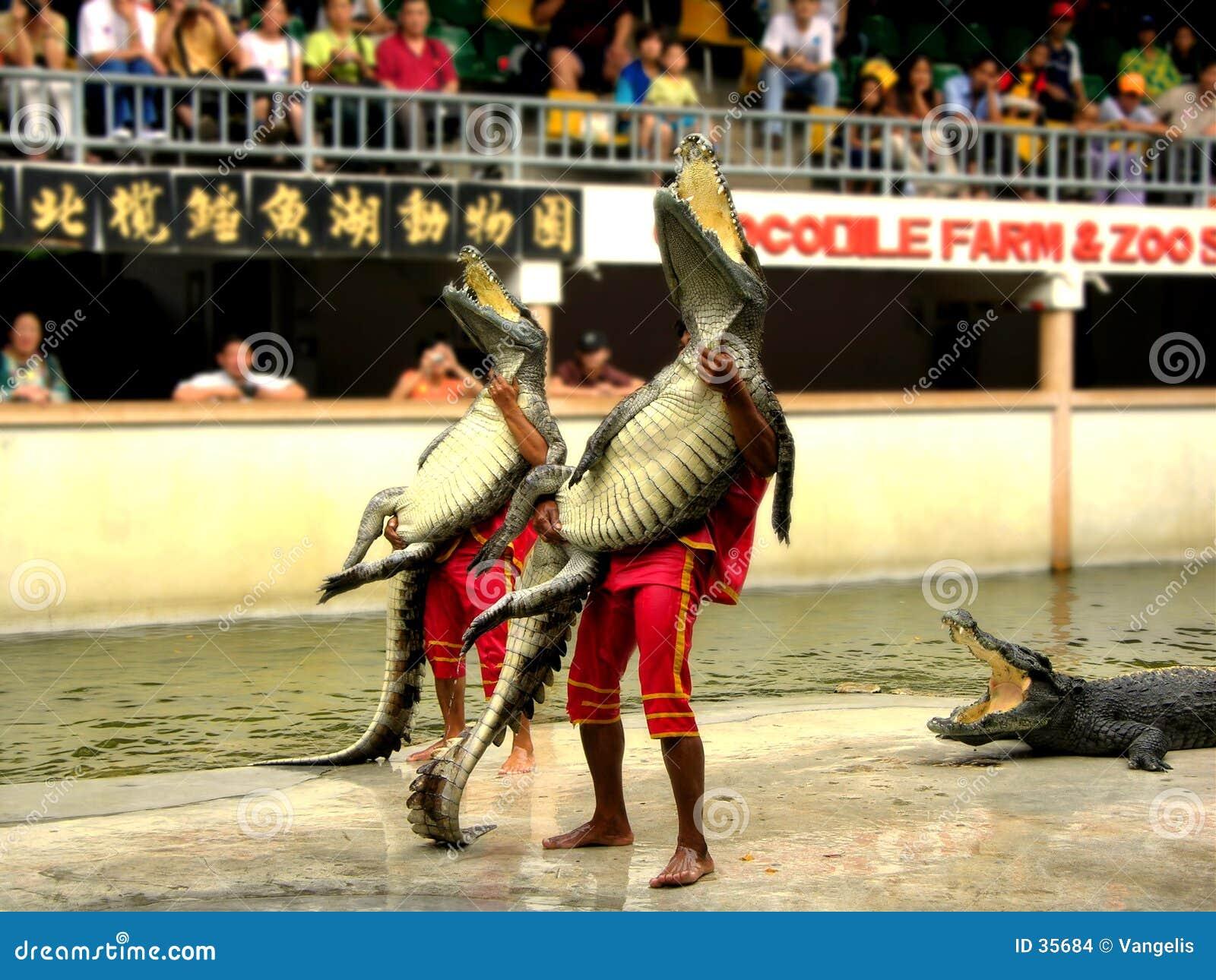 Download Samutprakan Krokodil-Bauernhof Und Zoo 7 Stockfoto - Bild von inländisch, siamesisch: 35684