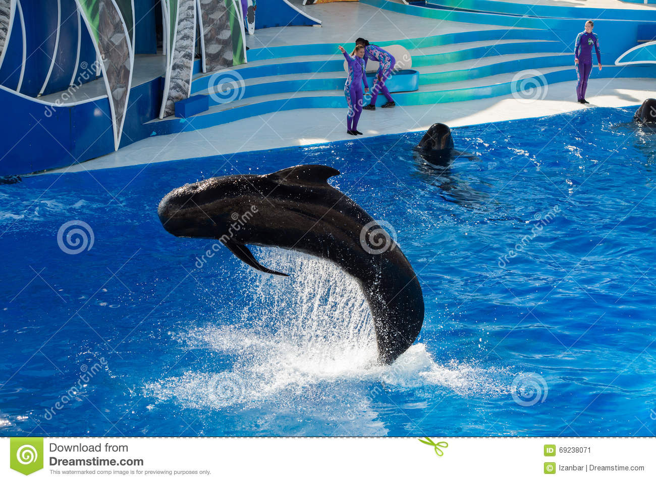 San diego usa november 15 2015 the dolphin show at for Pool show san antonio