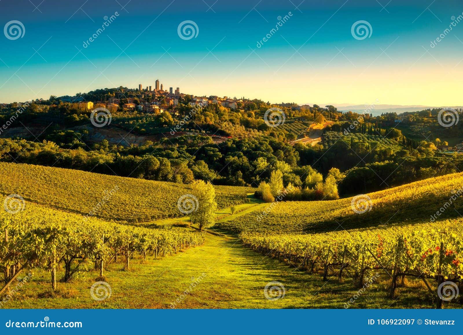 San Gimignano panoramiczny średniowieczny miasteczko, vineyar górujemy linię horyzontu i