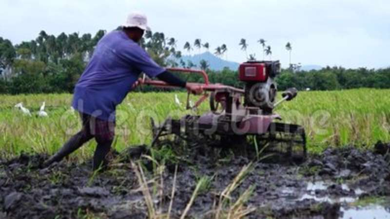 Farm worker uses hand tractor plowing machine to prepare for rice planting   Furrow, flatland