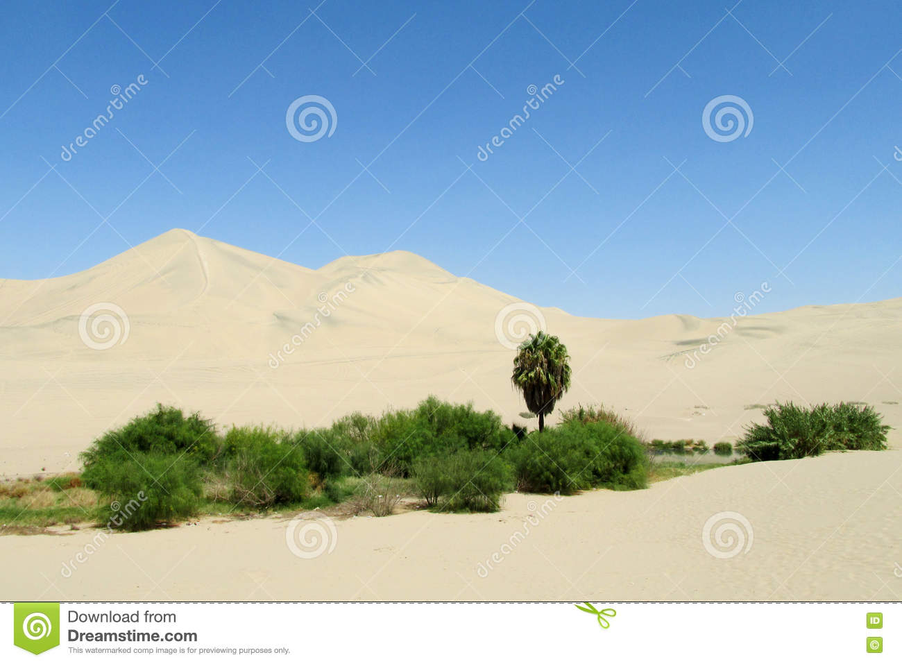 Sand desert dunes and green oasis with bushes and palm tree