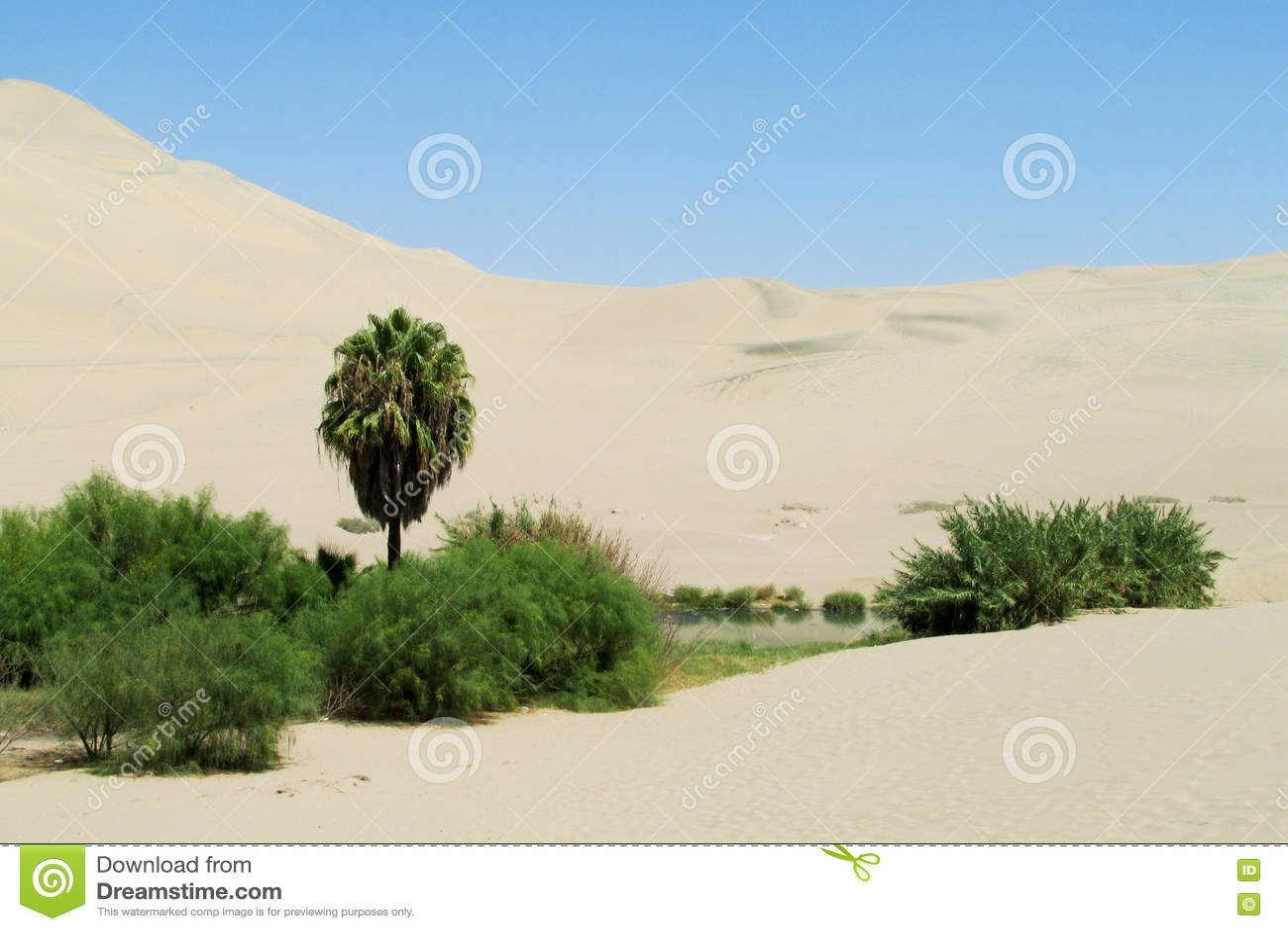Sand desert dunes and green oasis