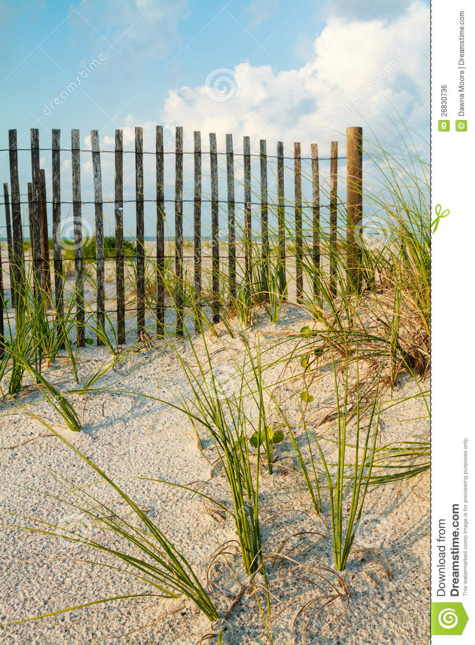 Sand Dune And Sea Grass Along A Fence Royalty Free Stock