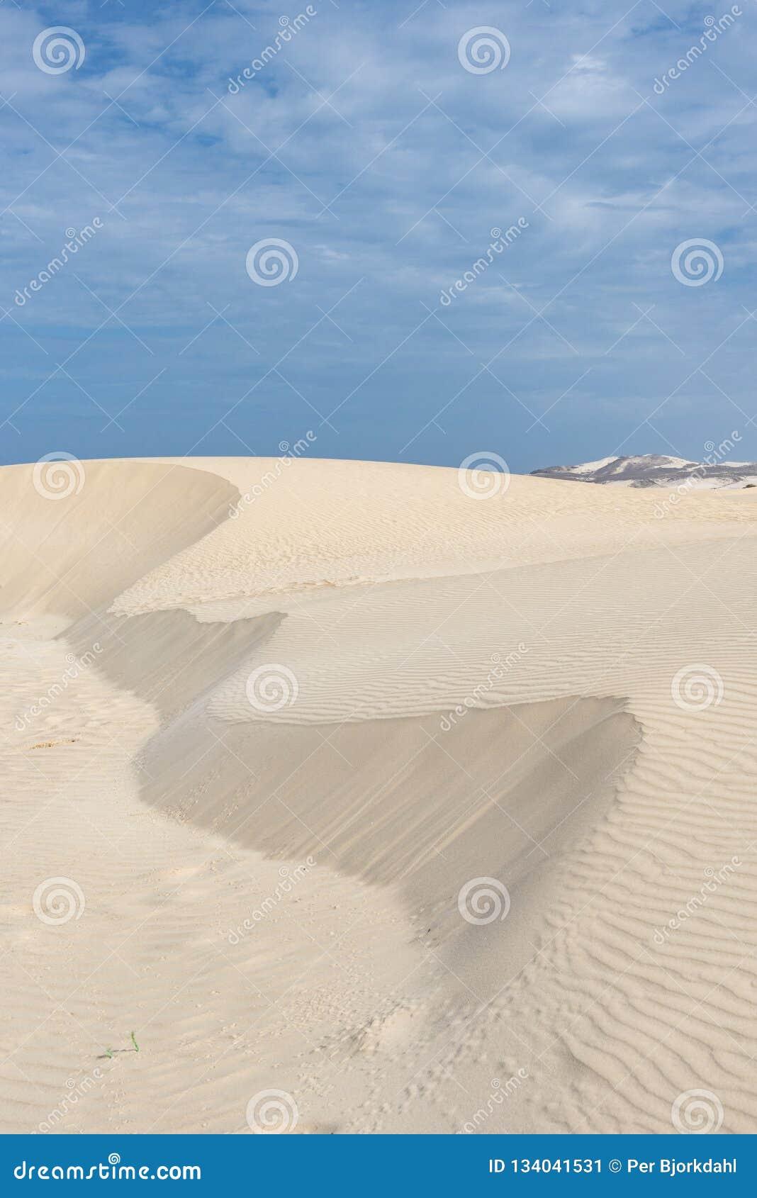 Sand Dune Santa Monica Beach Boa Vista Stock Image Image Of Nature Protected 134041531