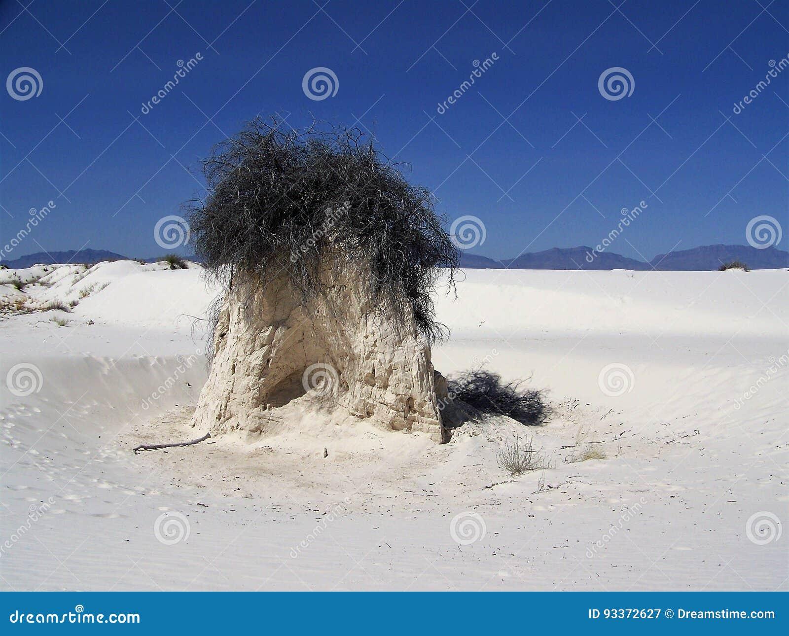 Sand och vind huggen vegetation