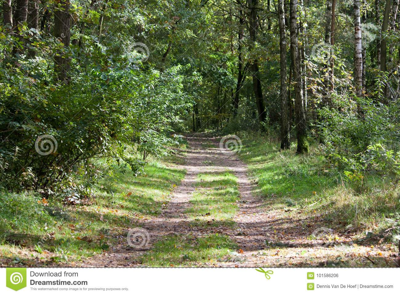 Sand road through forest.