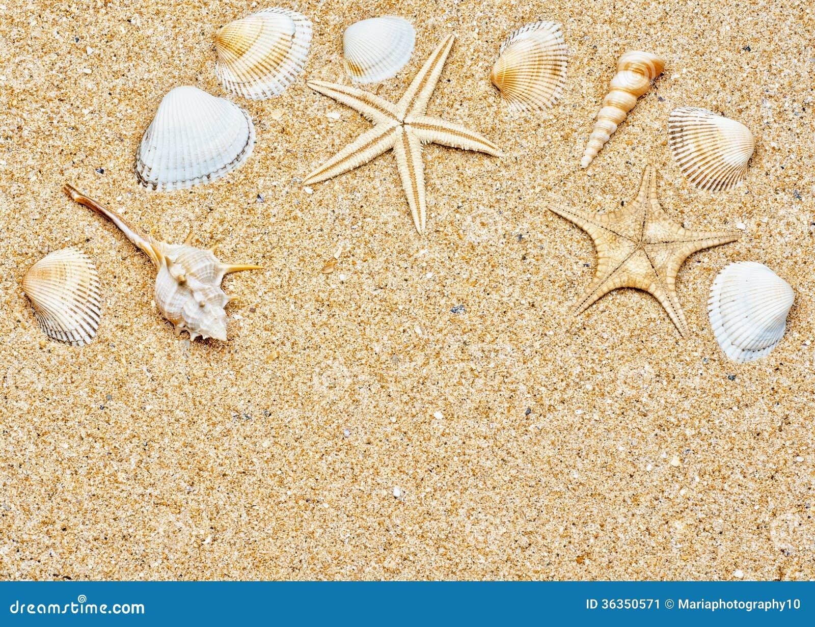 Sand and sea shells frame stock image image 36350571