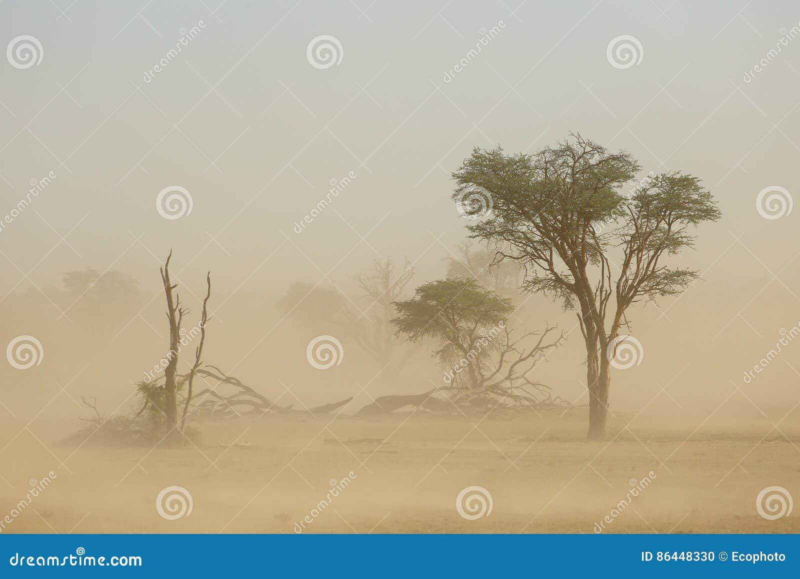 Sand storm - Kalahari desert