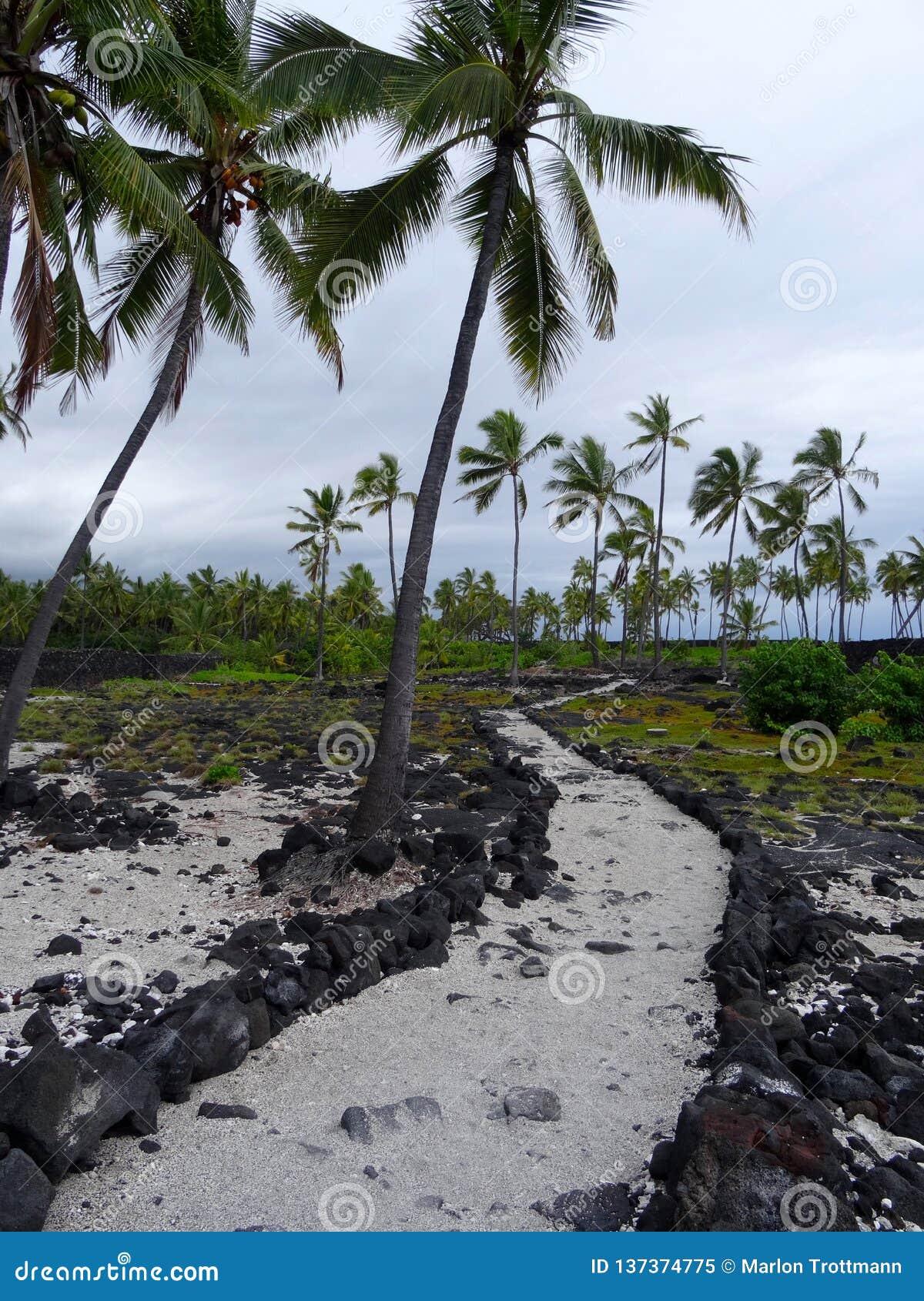 Sandbana för uhonuanolla i för Puen 'Honaunau nationalpark