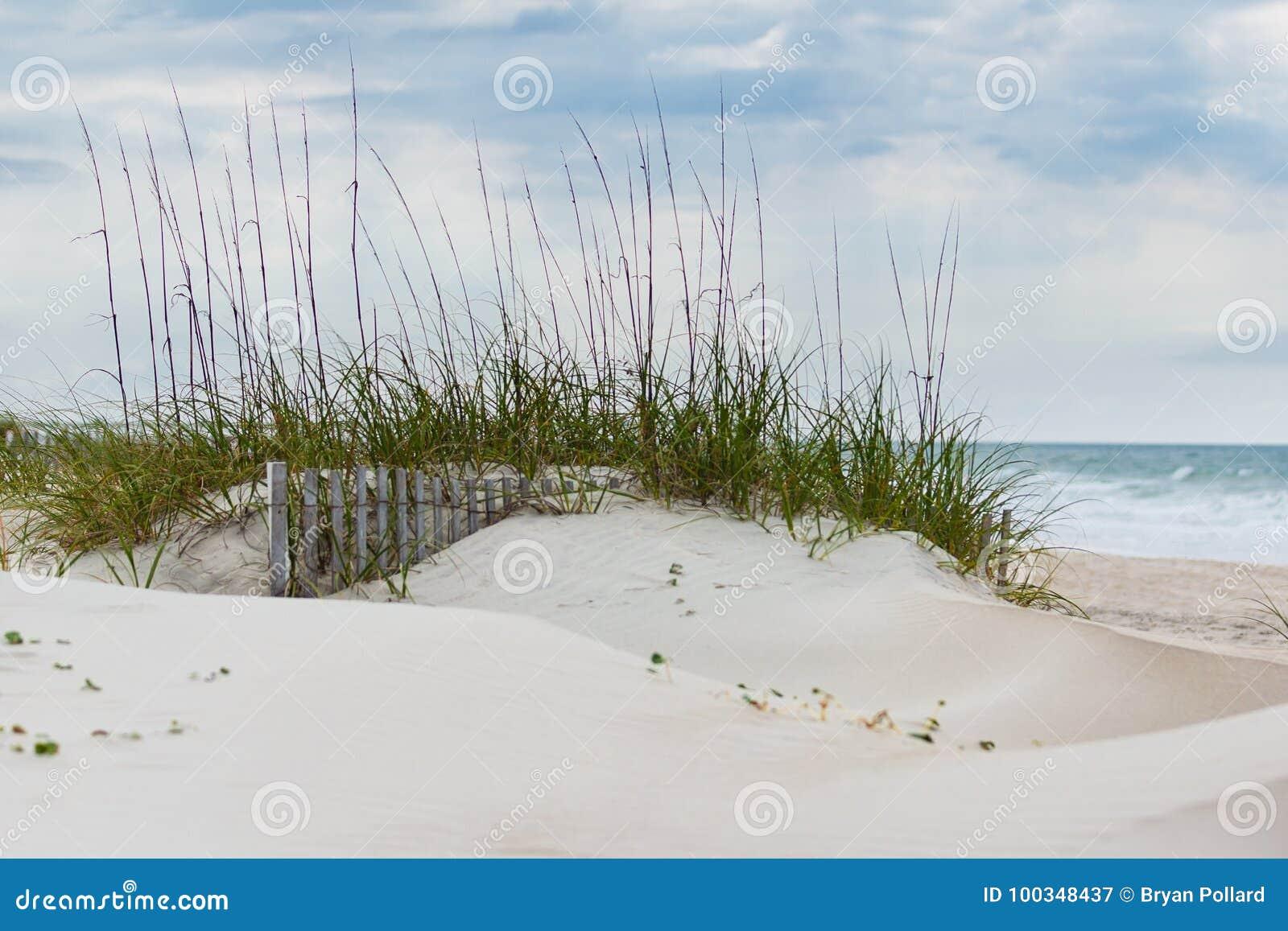Sanddünen und Strandhafer