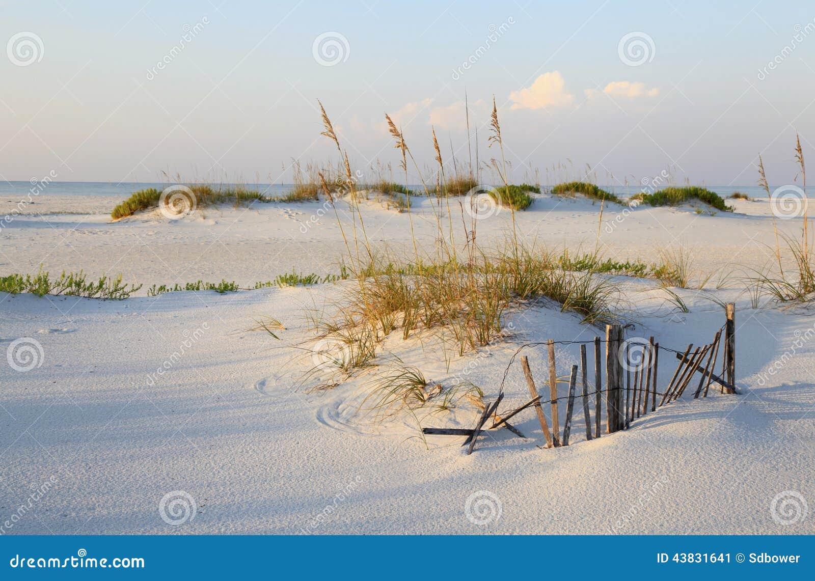 Sanddyn och havshavre på en ursprunglig Florida strand