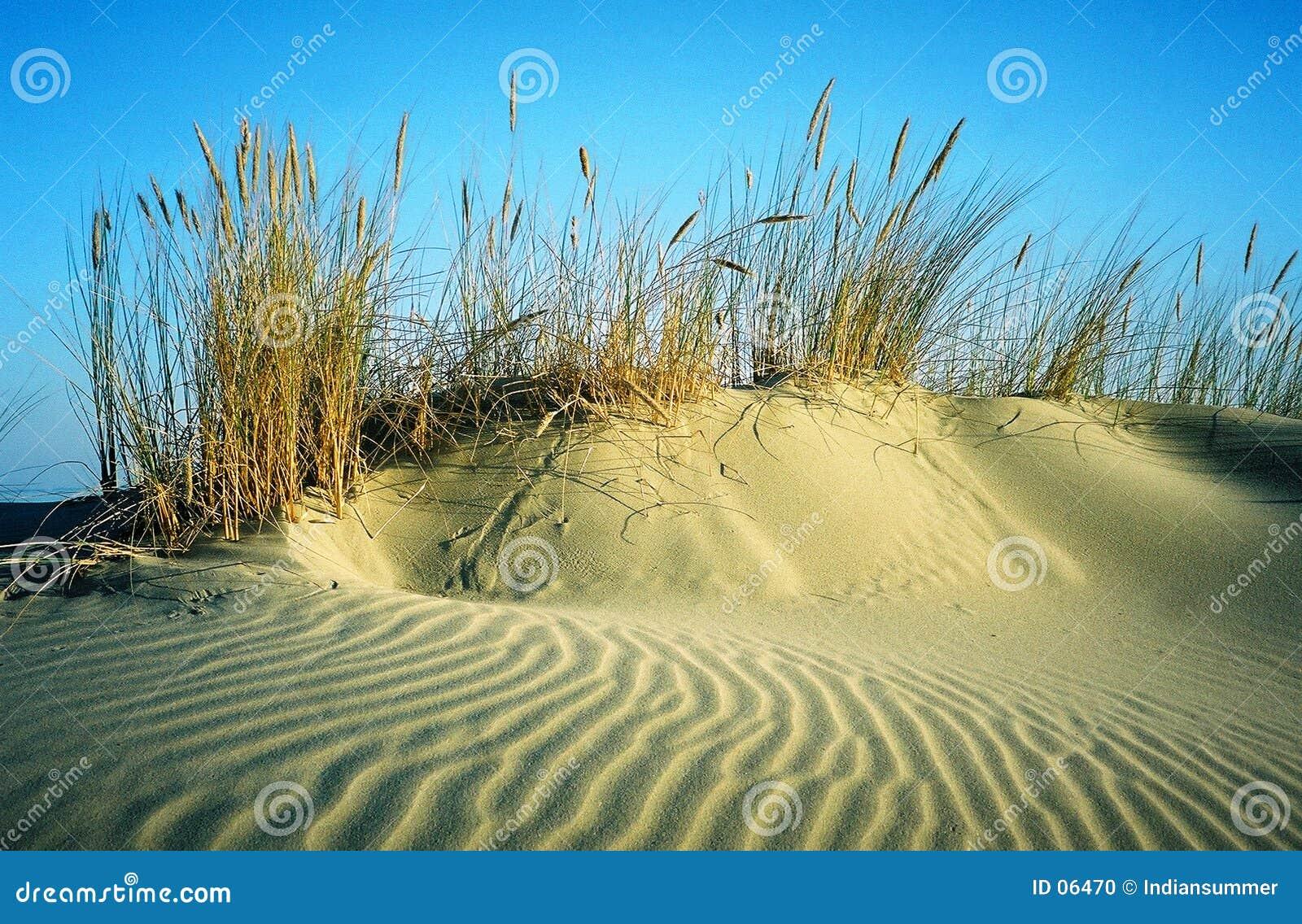 Sandhill with bents
