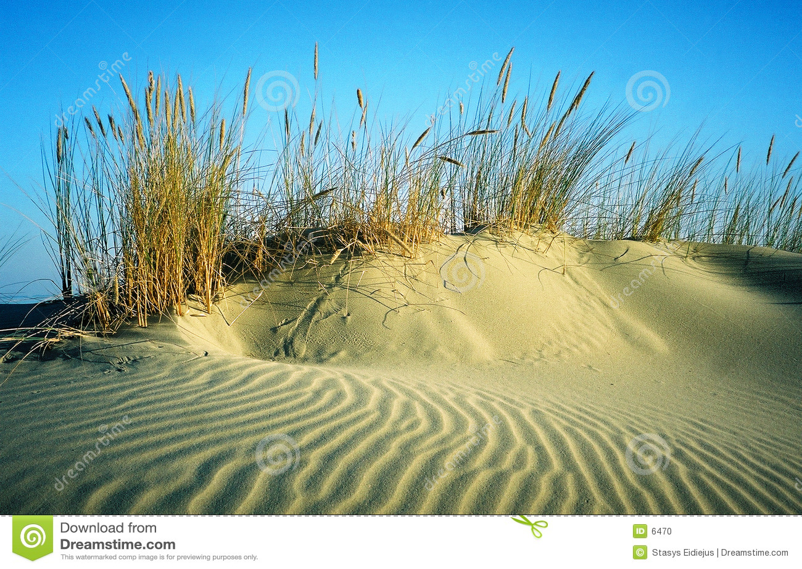 Sandhill com bents