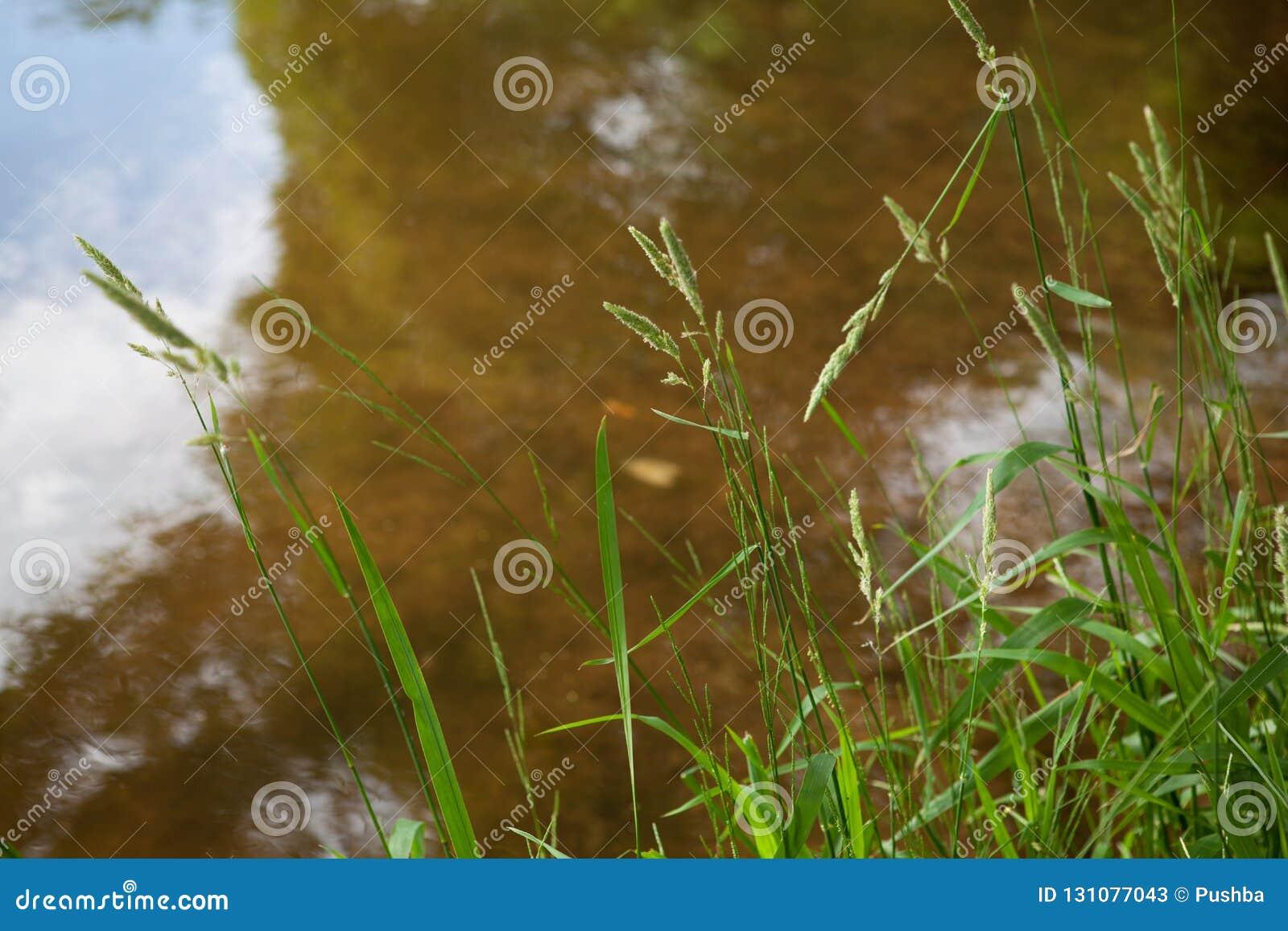 Sandig botten av ett bevuxet damm