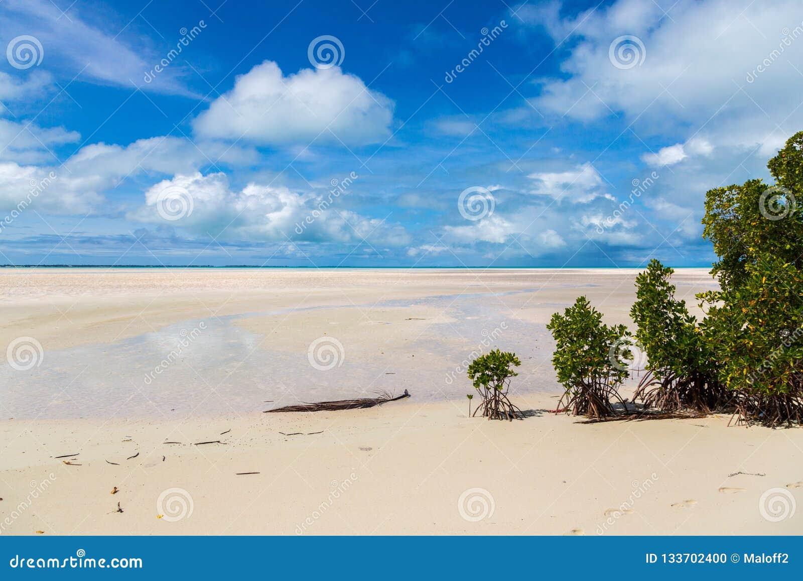 Sandig paradisstrand av den azura turkosblåa grunda lagun, norr Tarawa atoll, Kiribati, Gilbert Islands, Mikronesien, Oceanien