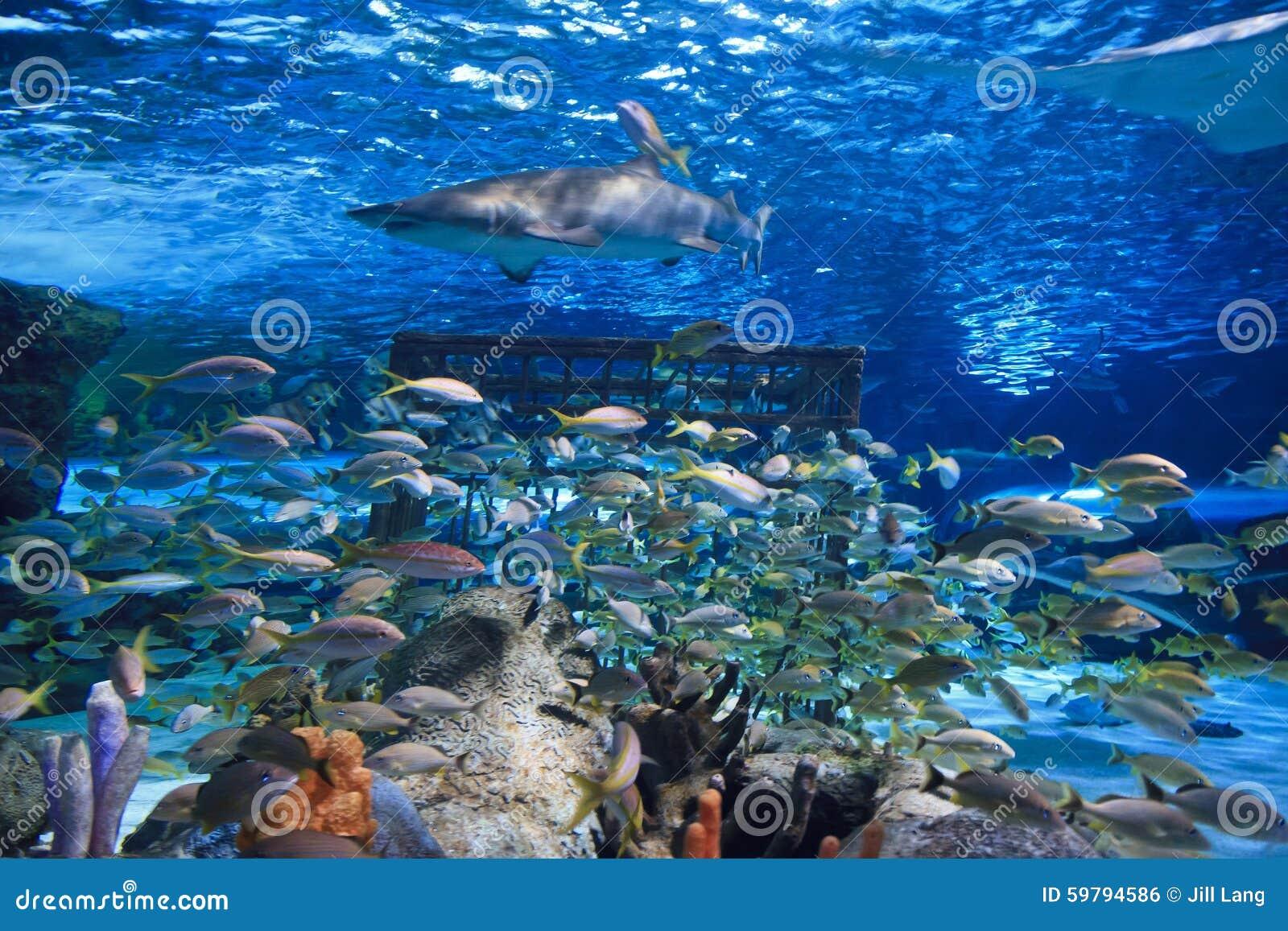 Sandtiger-Haifisch