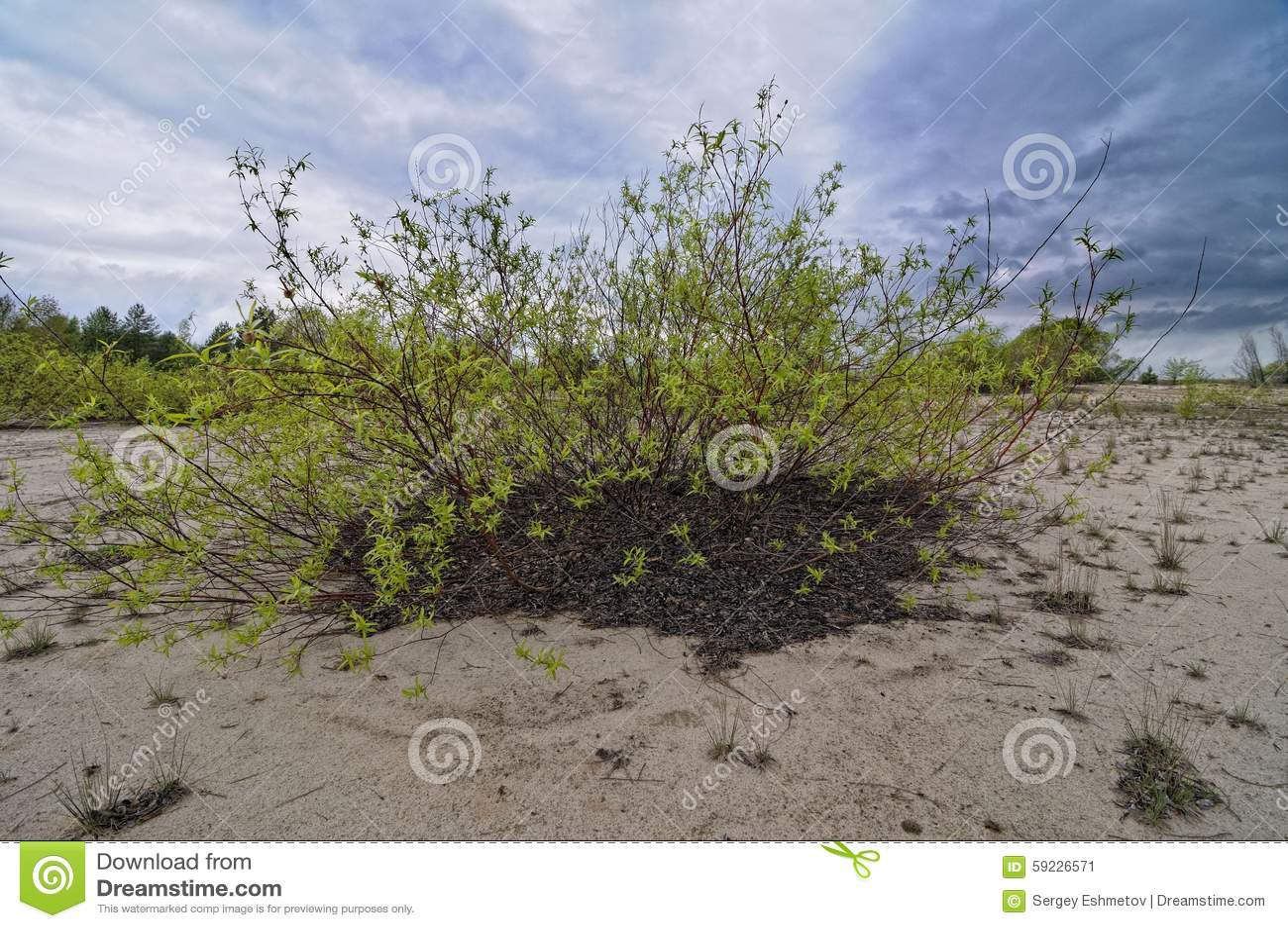 Download Sandy Beach imagen de archivo. Imagen de paisaje, campo - 59226571