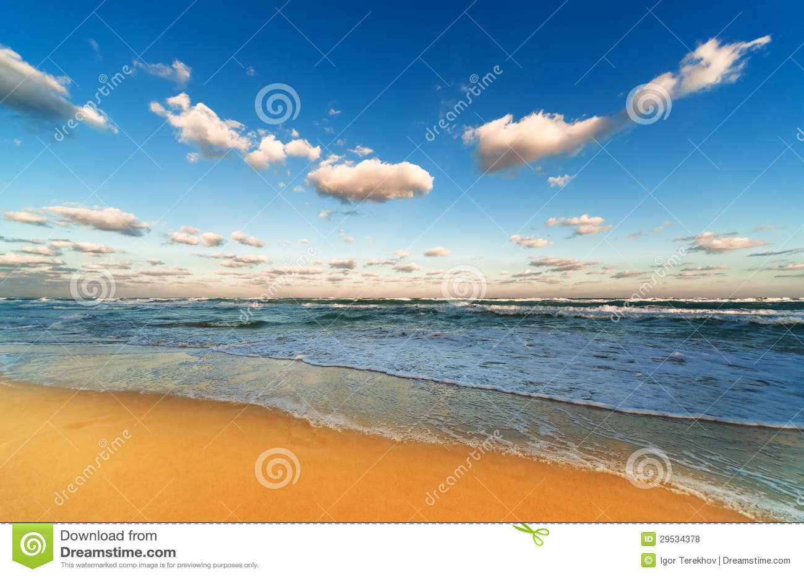 Sandy Beach bonito