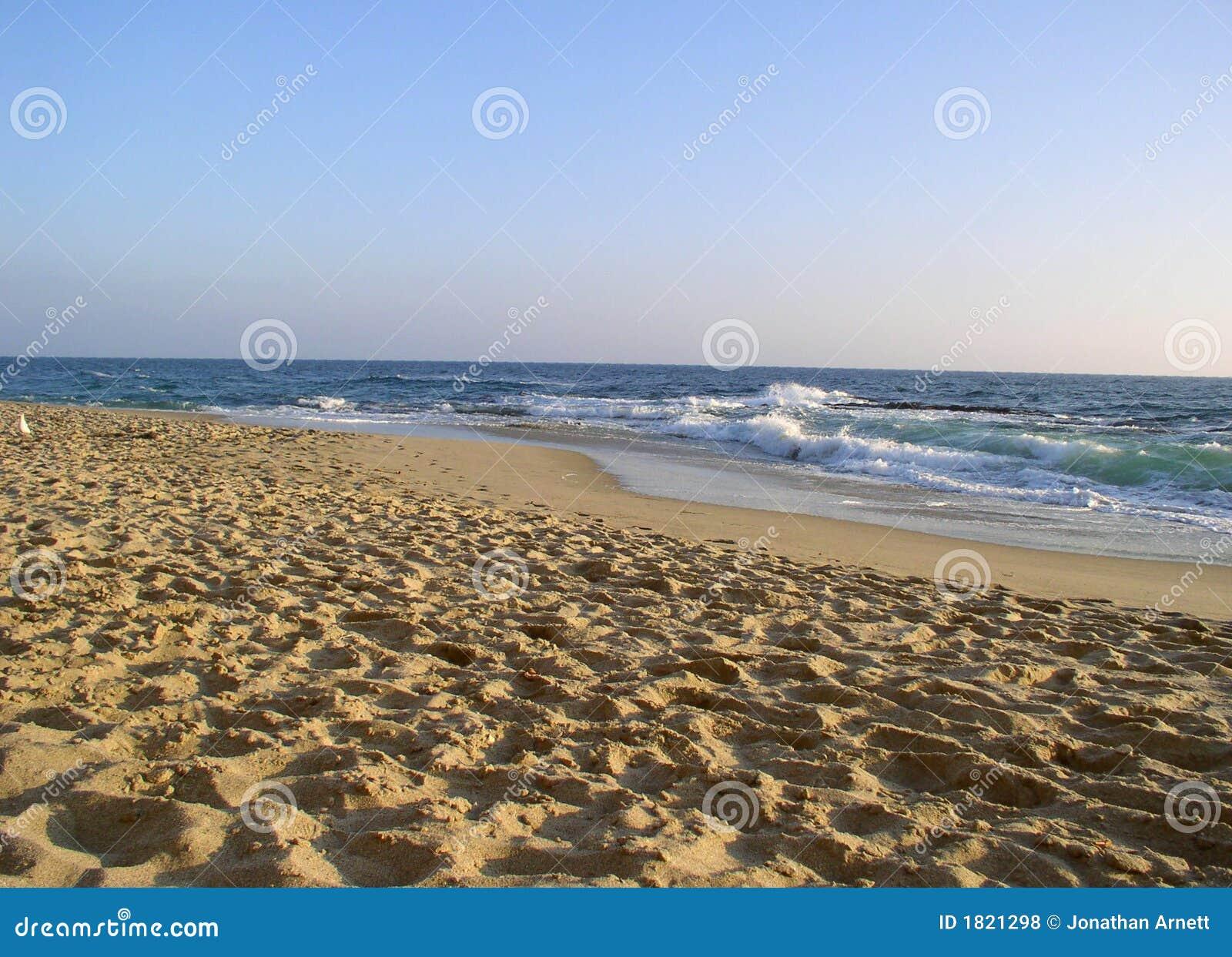 Sandy na plaży