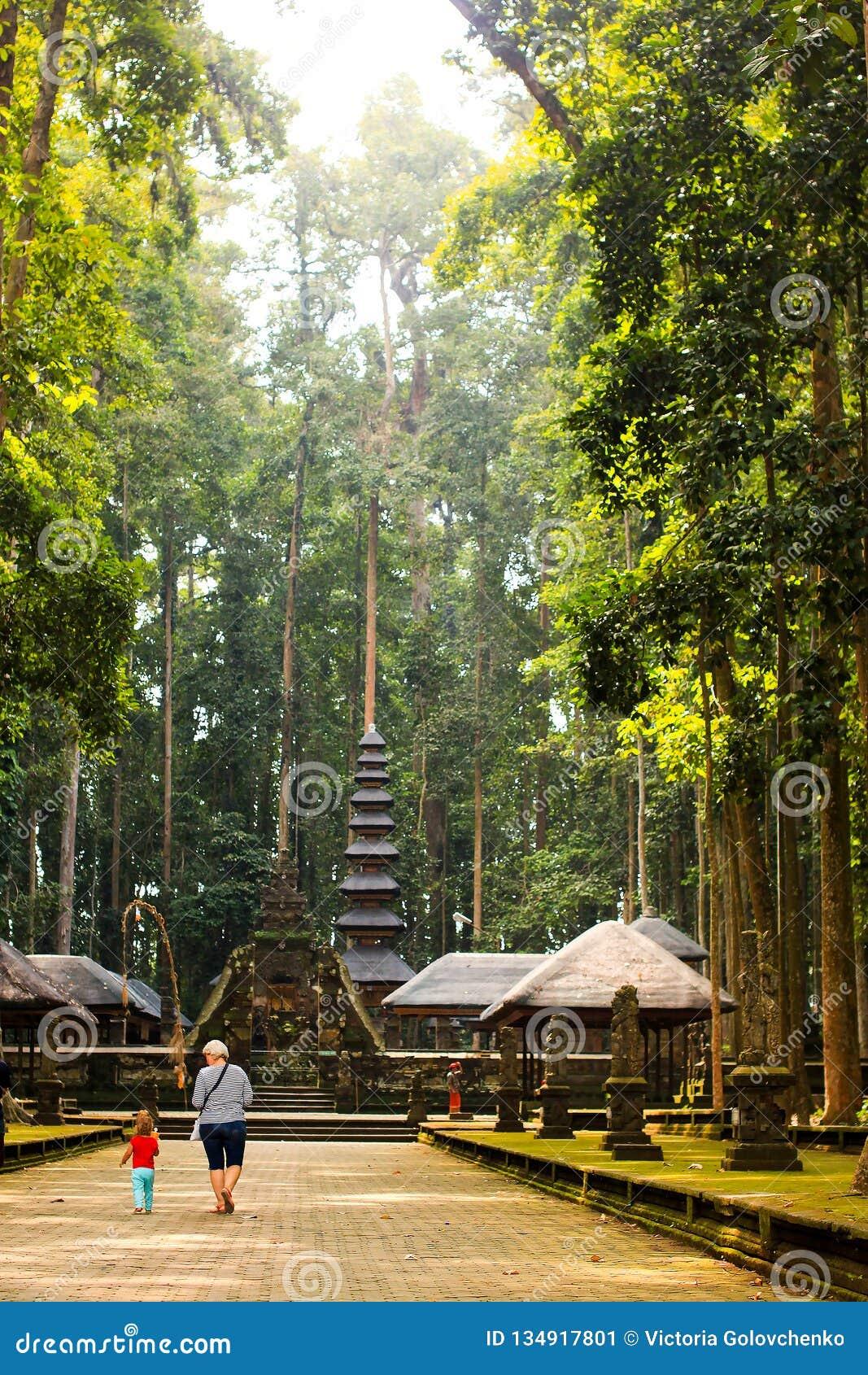 Sangeh apaskog i Bali, Indonesien