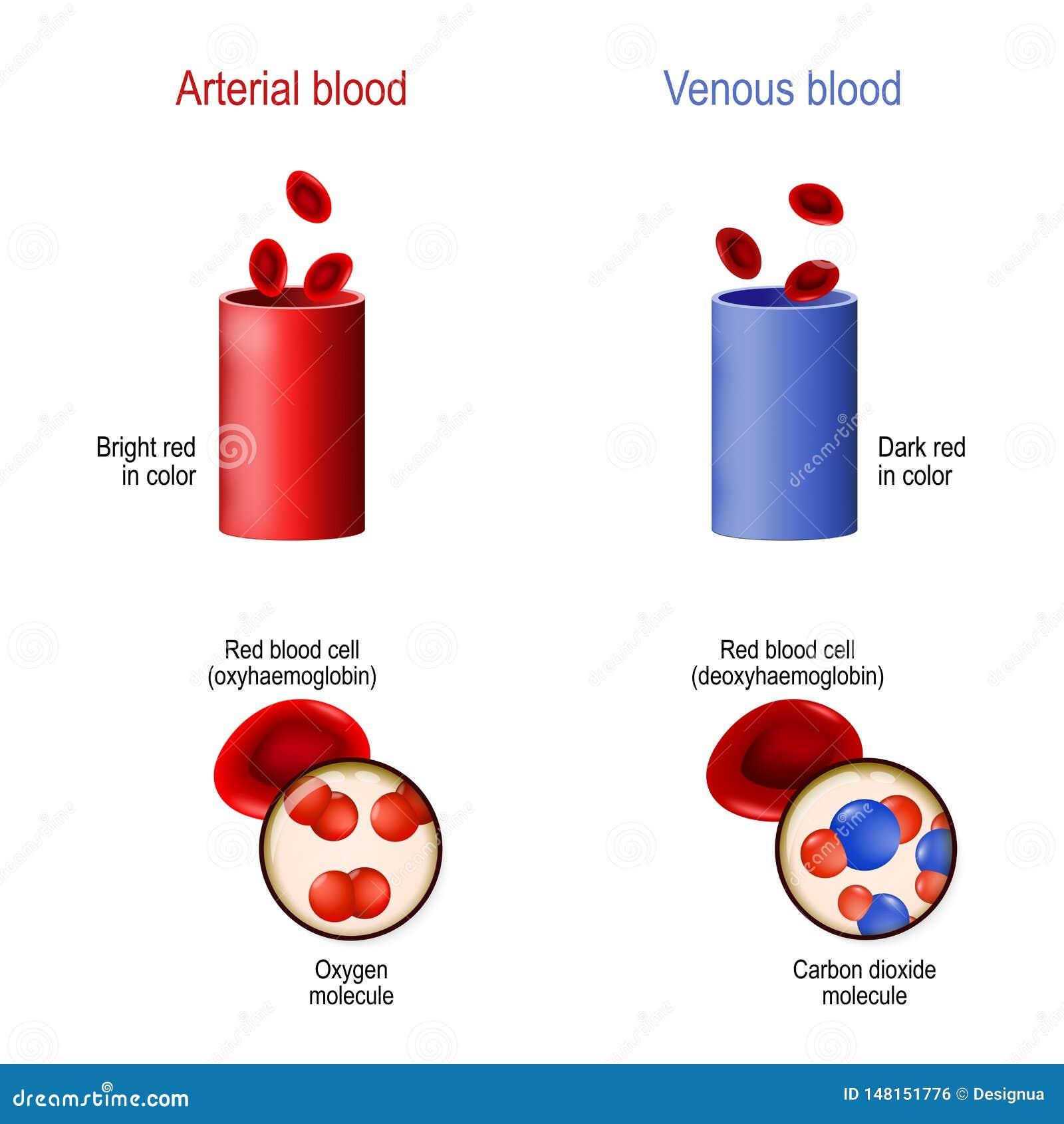 color de la sangre venosa