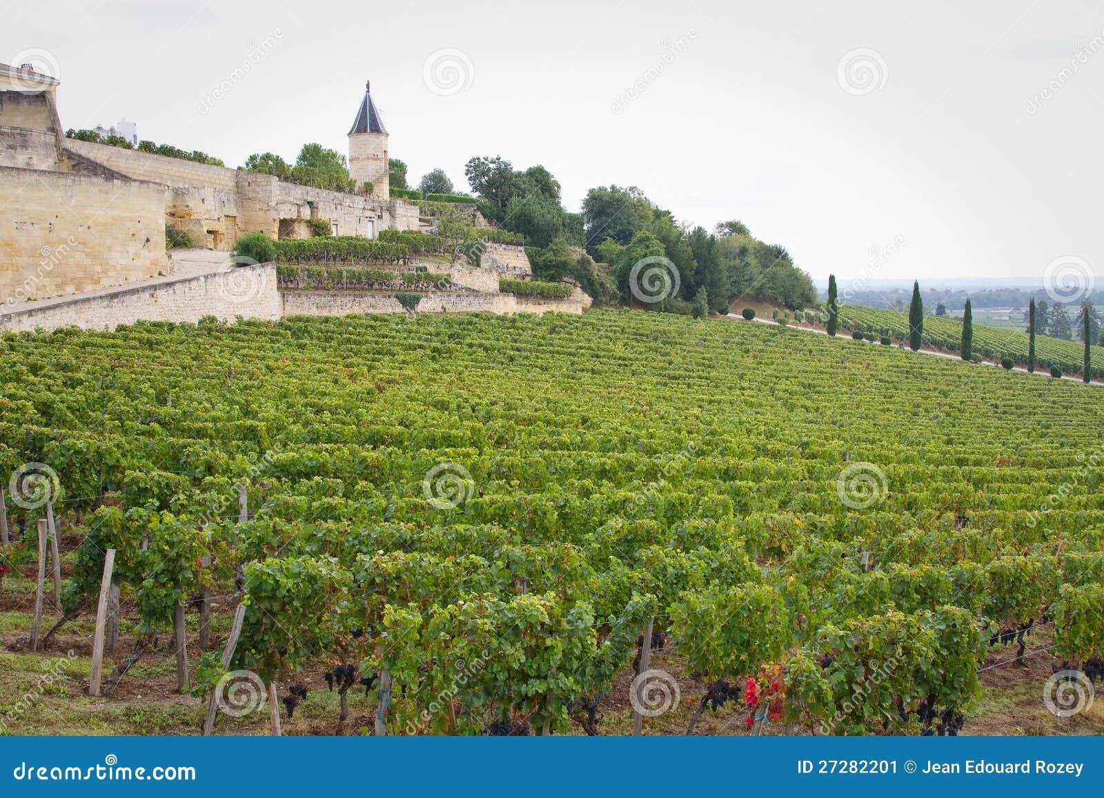 Sanktt Emilion vinodling