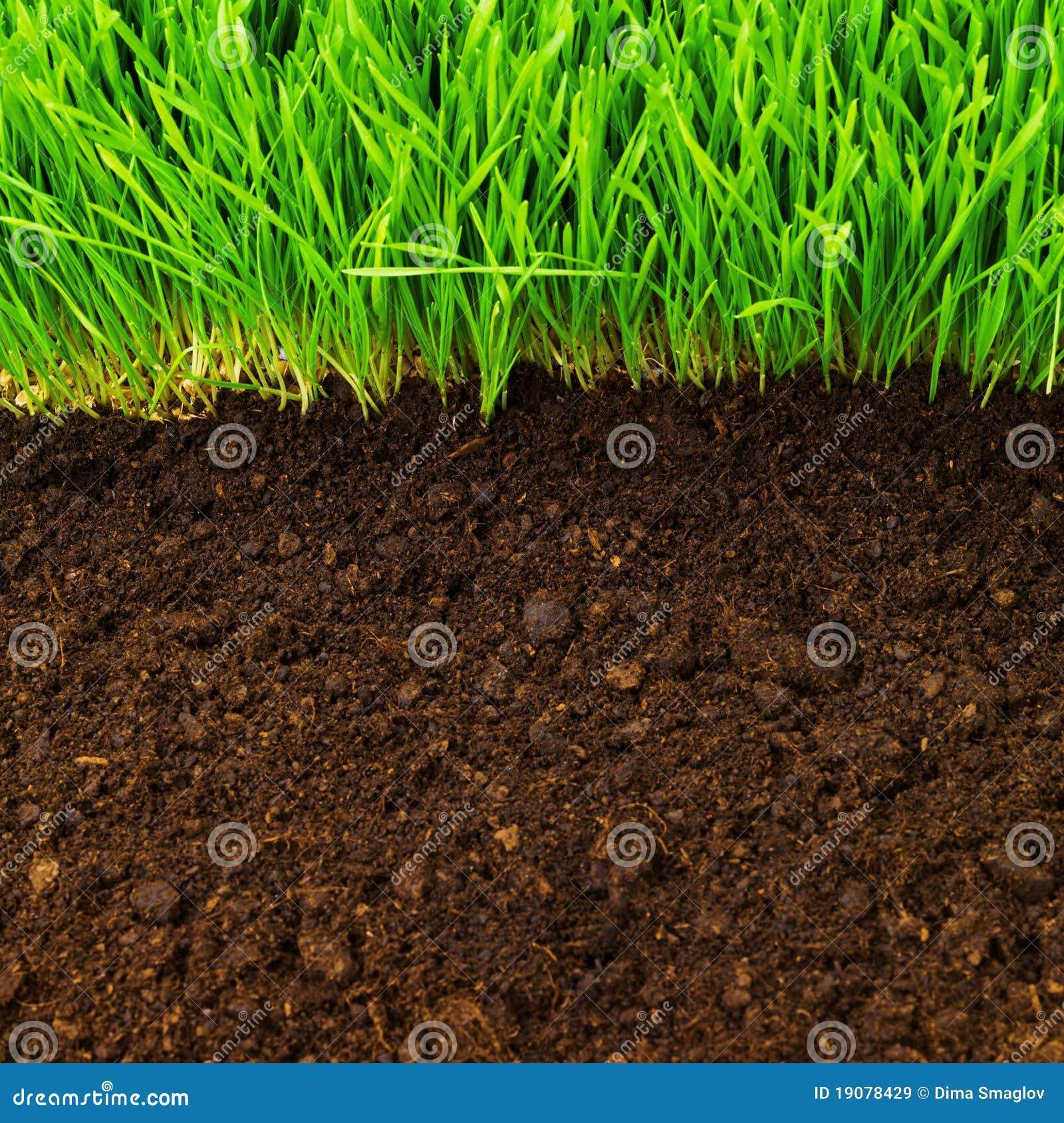 Sano en suelo imagen de archivo imagen de crezca for Como se creo el suelo