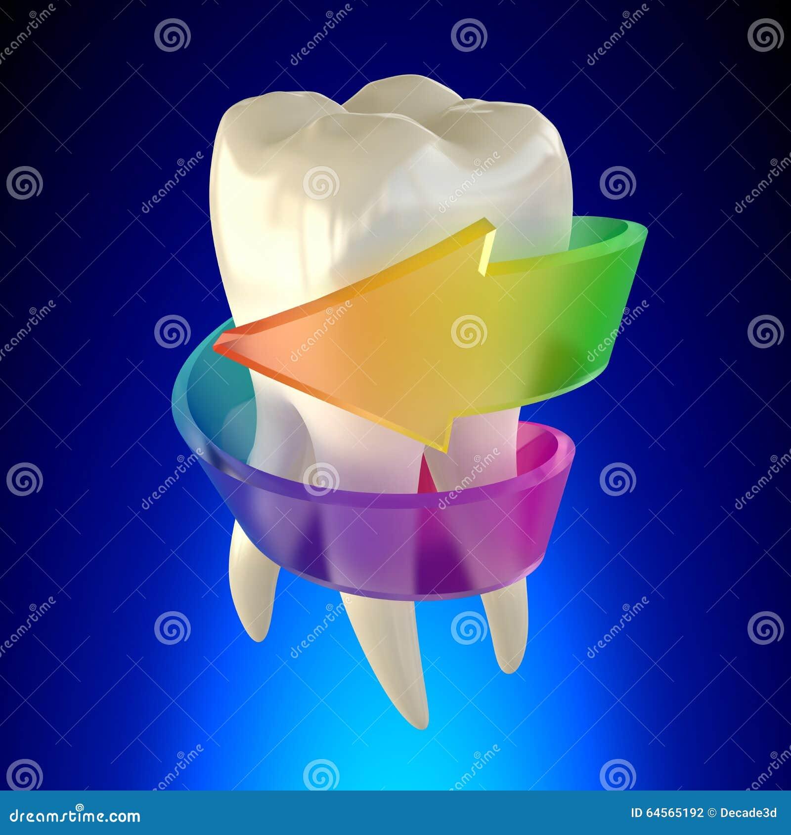 Sano molare del dente isolato su fondo blu