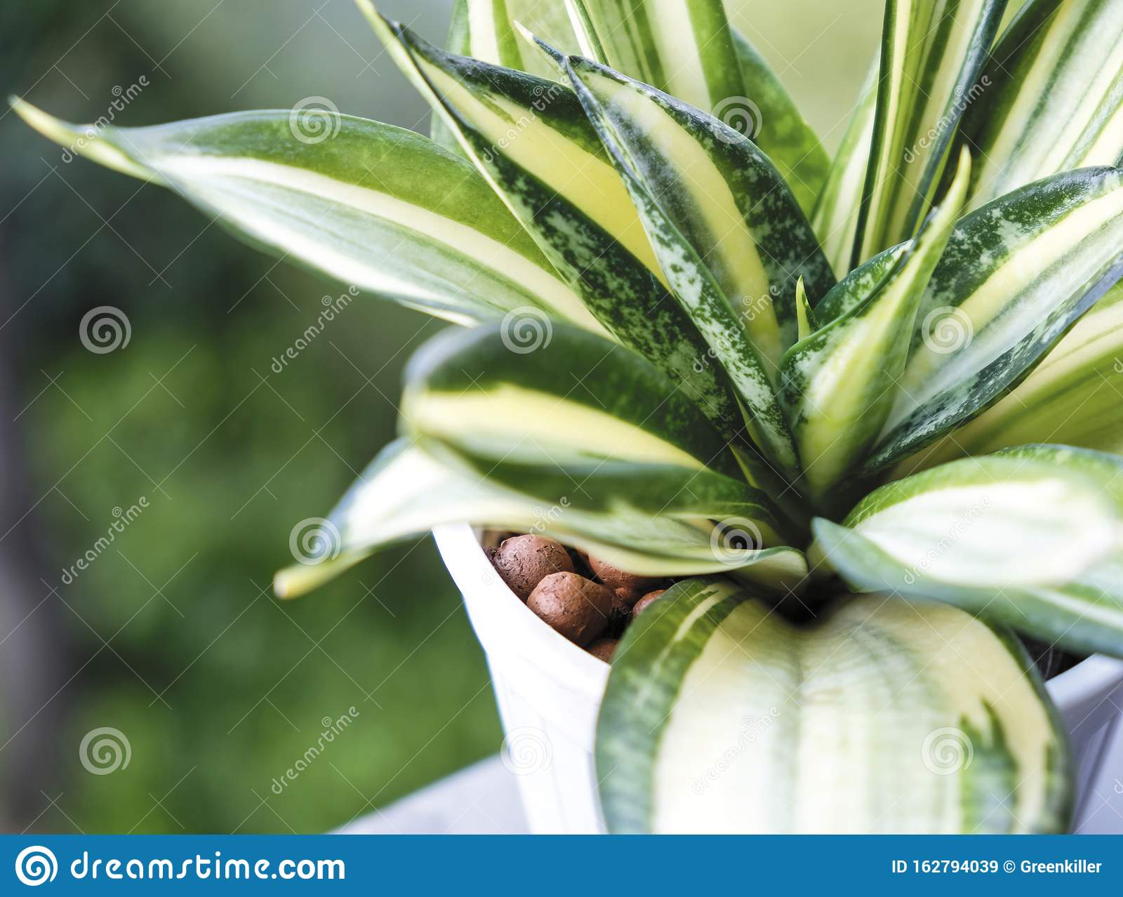 7 623 Plant Snake Photos Free Royalty Free Stock Photos From Dreamstime