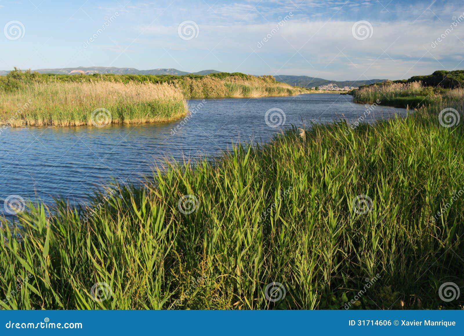 Sant Climent pond. Delta del Llobregat.
