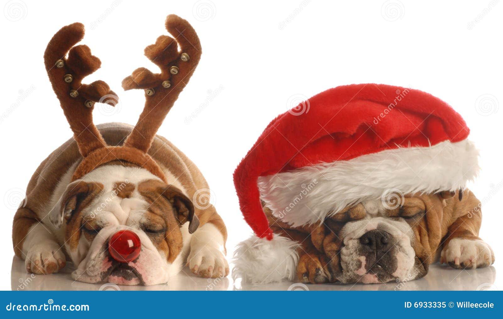 Santa του Rudolph σκυλιών