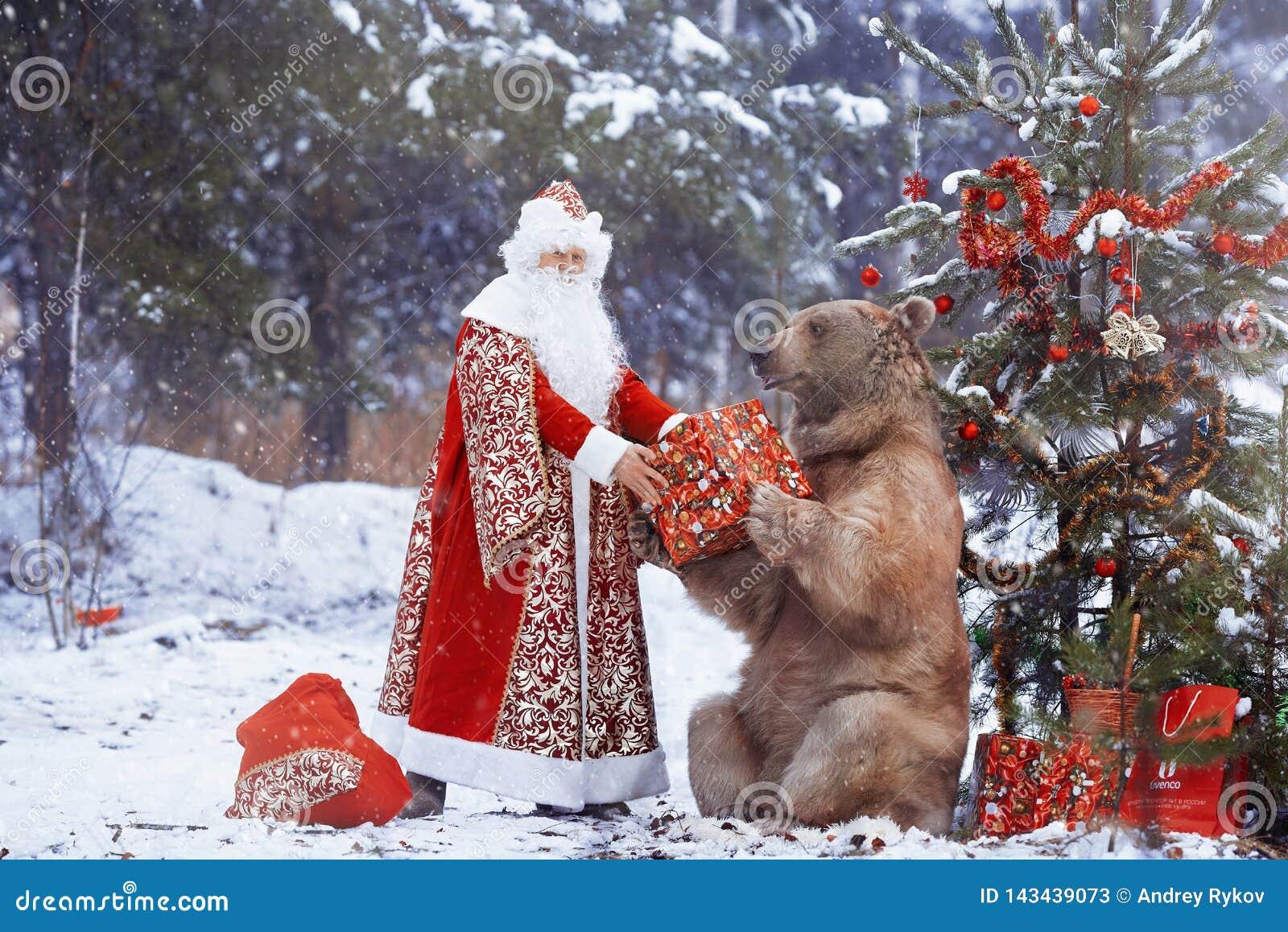 Santa Claus donne le cadeau de Noël à l ours brun