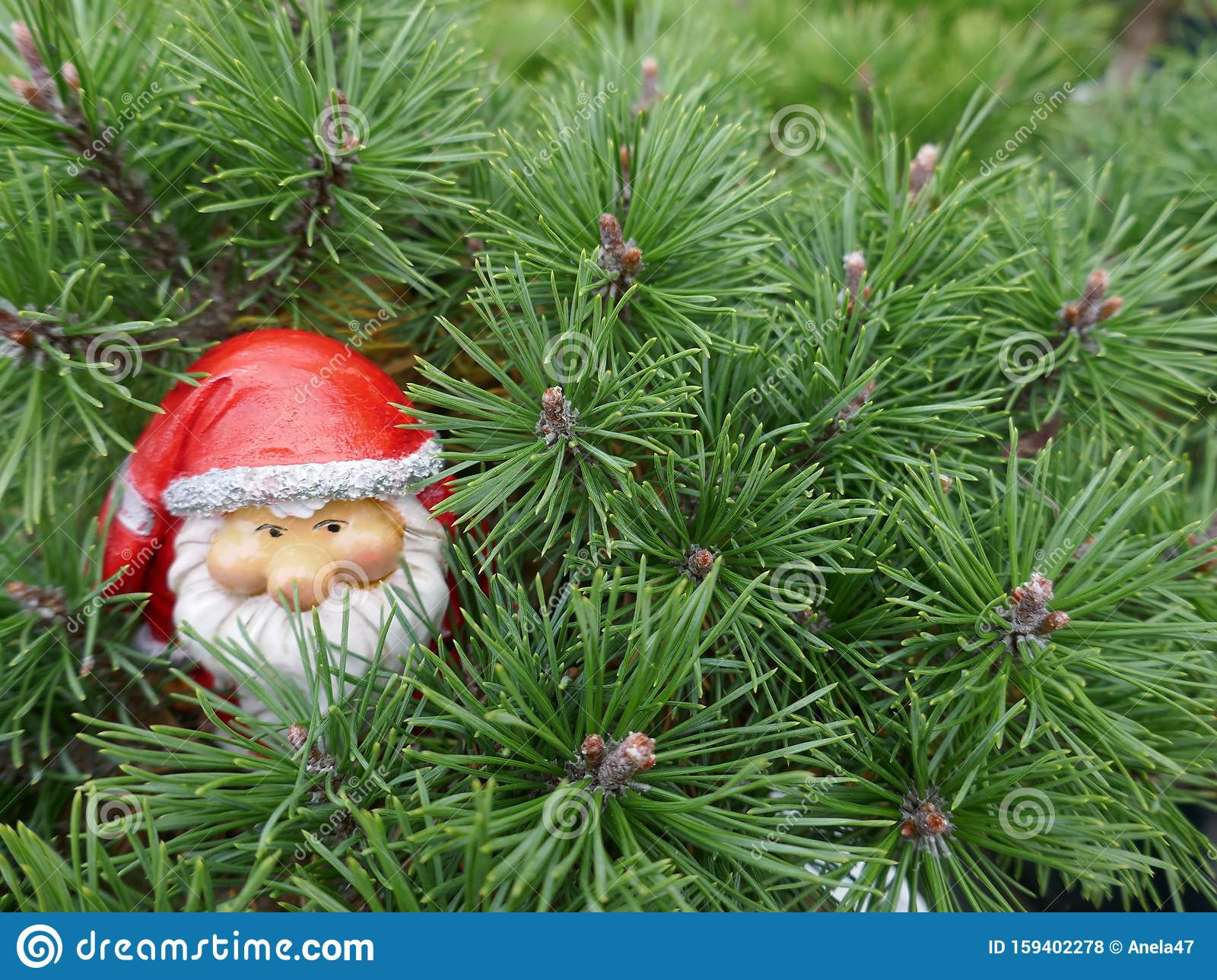 Santa Claus In The Forest A Cute Little Garden Gnome In Santa Claus Costume Hides In The Forest Between Pine Branches Stock Photo Image Of Copy Background 159402278