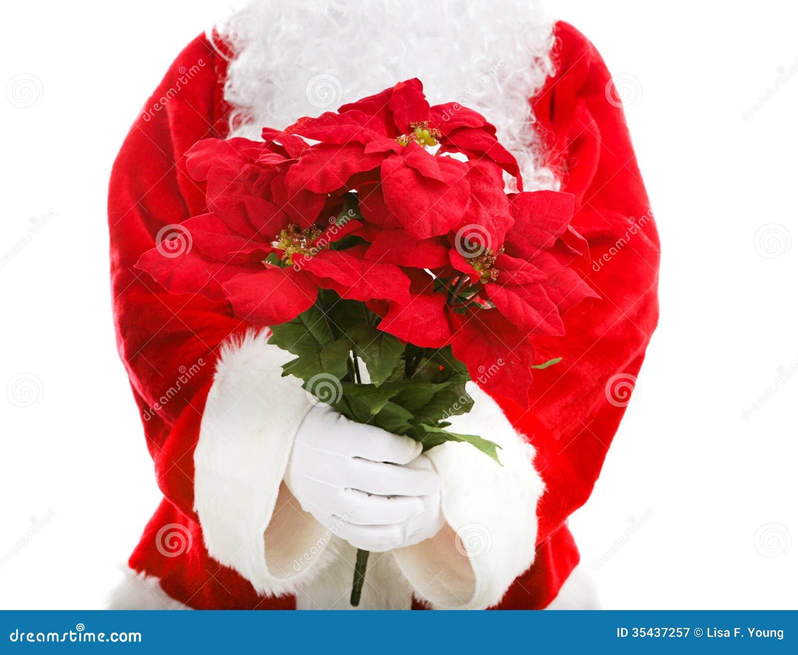 Santa claus holding poinsettias royalty free stock