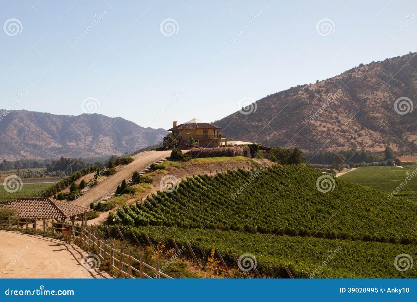 Santa Cruz-wijngaard, Chili