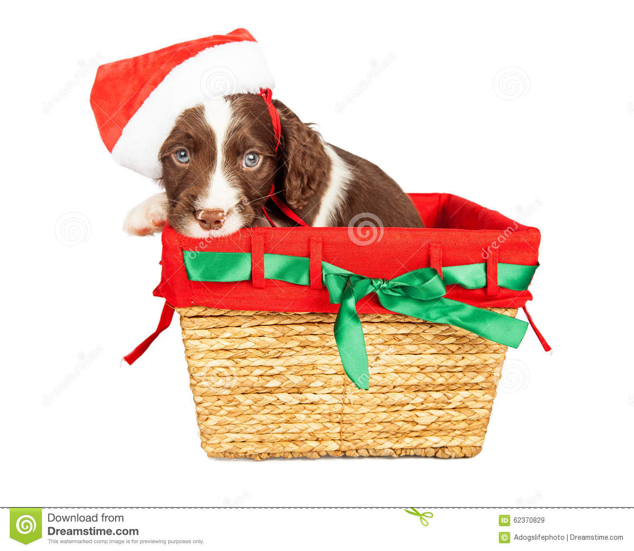 Santa puppy in christmas basket stock image of