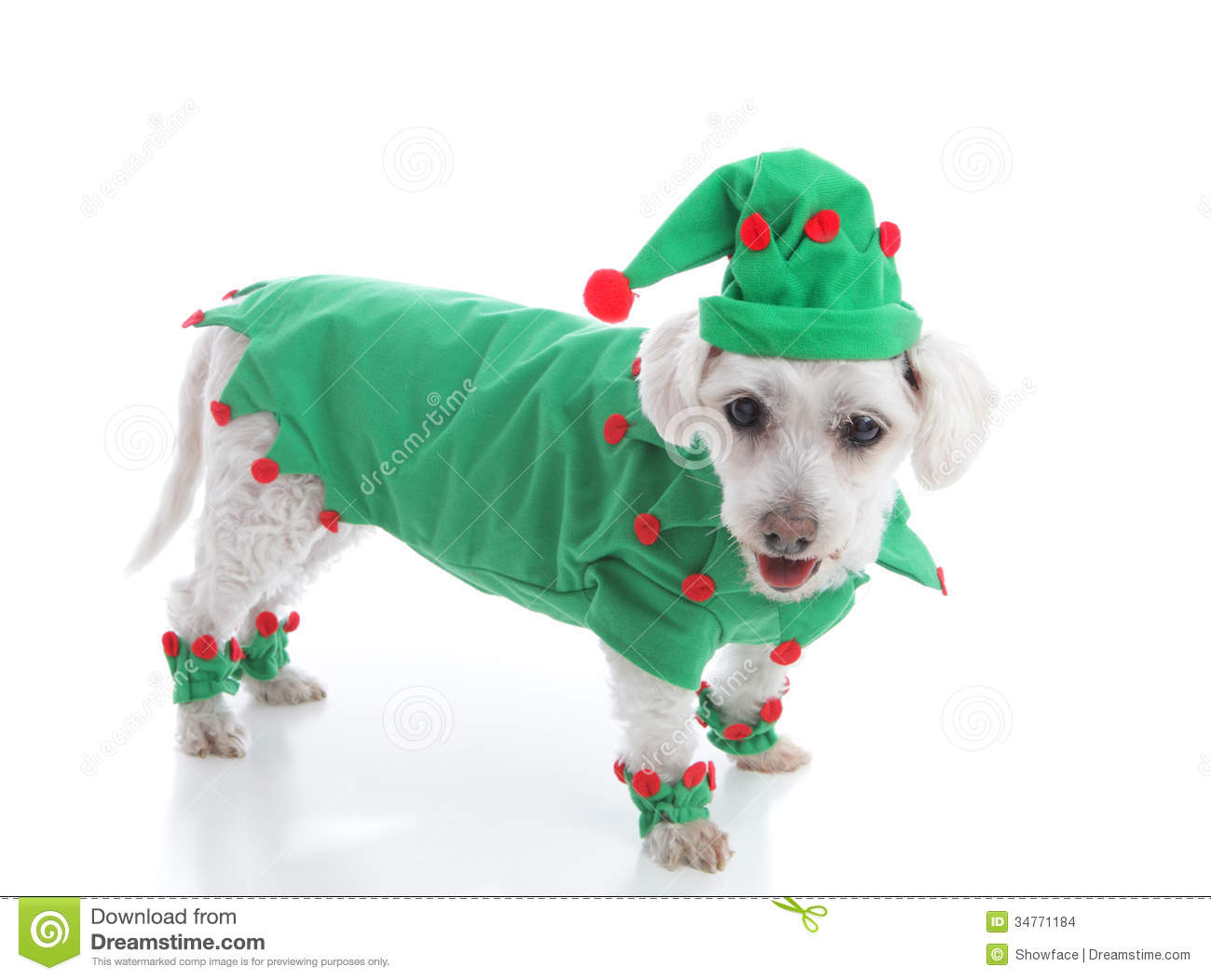 5e8dcc87ef6ac Pet dog wearing a red and green coat and pointy hat. Suitable as a  Christmas Elf