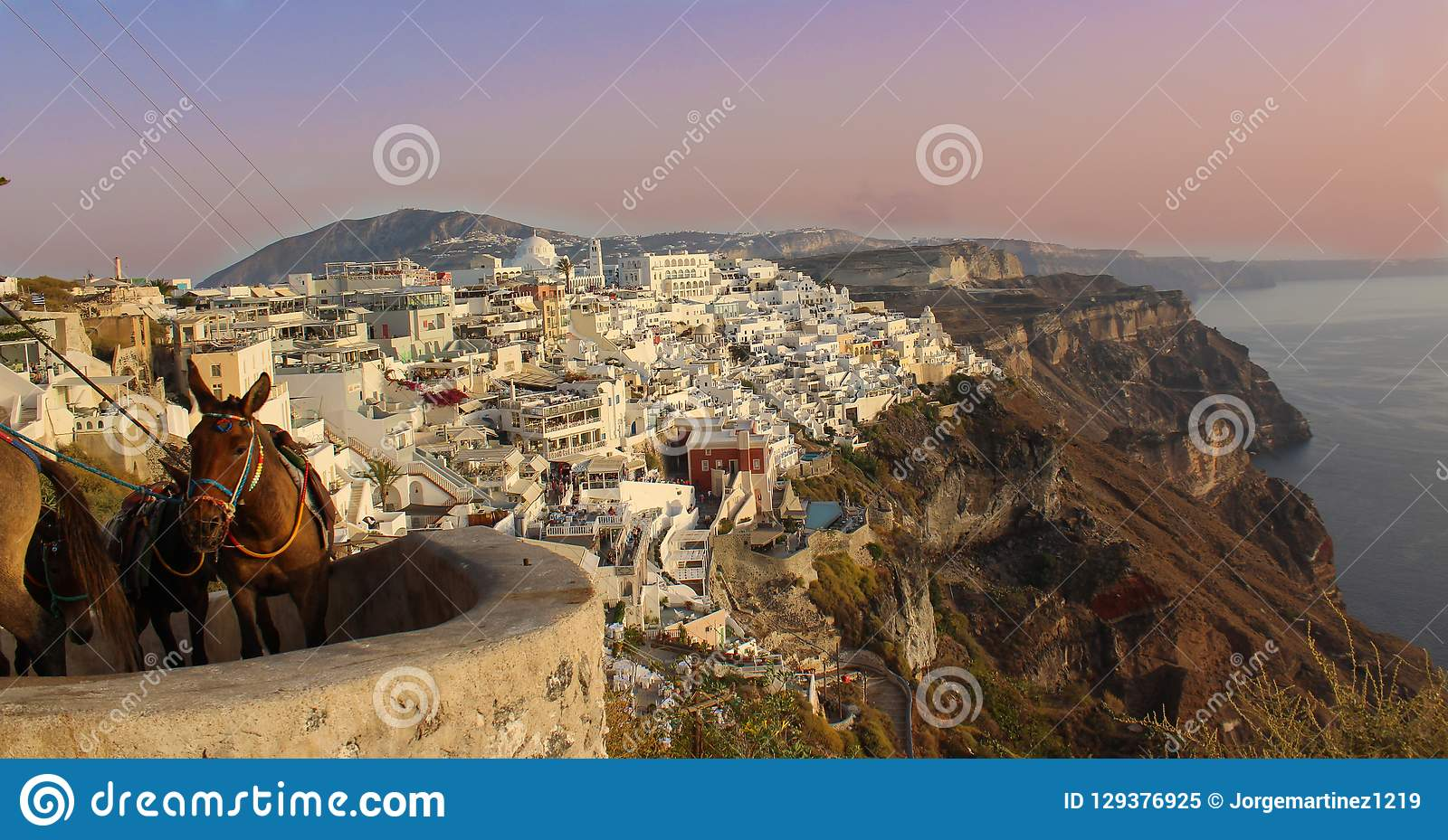 Santorini, Grécia - asno grego