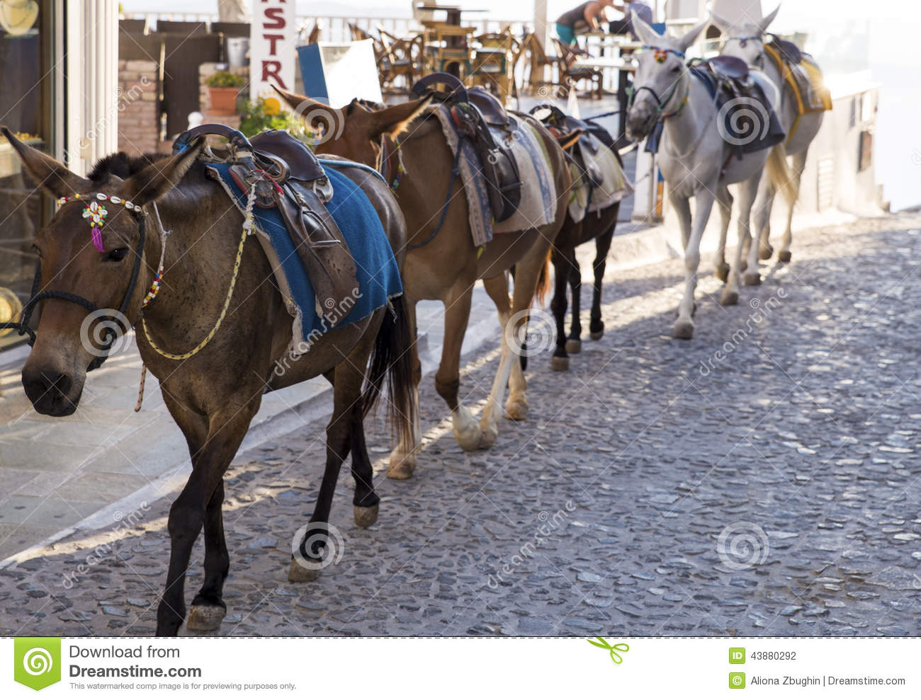 Santorini Horses Stock Photo - Image: 43880292