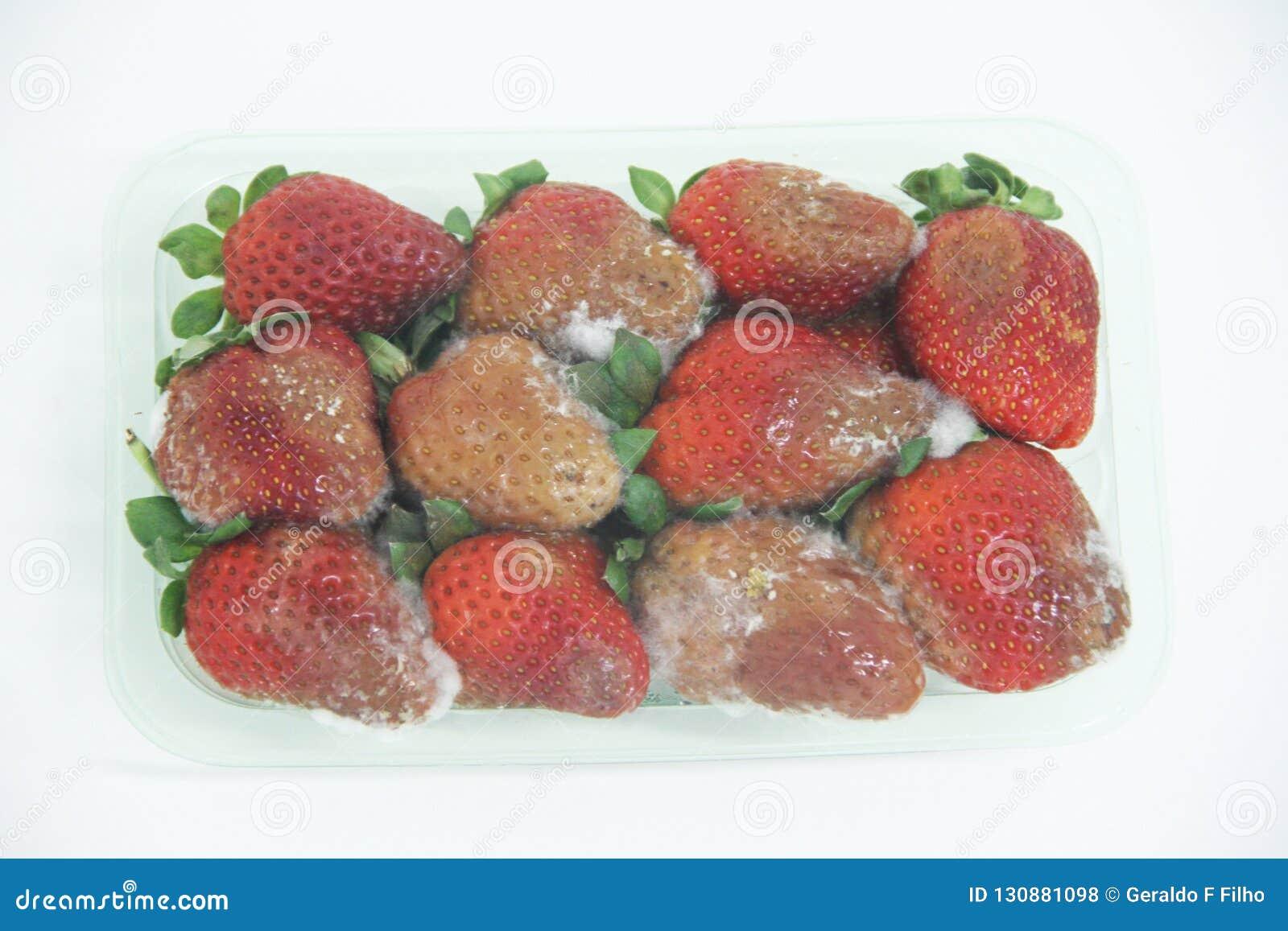 Sao saludable delicioso aislado agricultura Paulo Brazil de la fruta del molde de la comida de la fresa