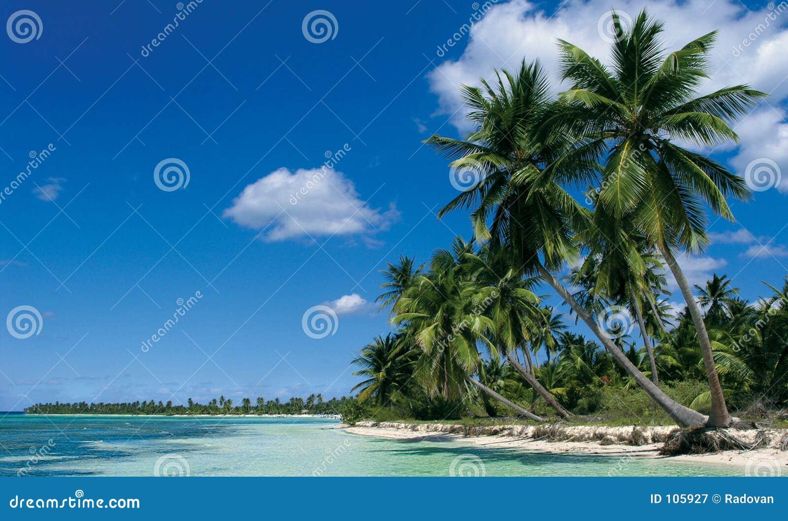 Saona Insel