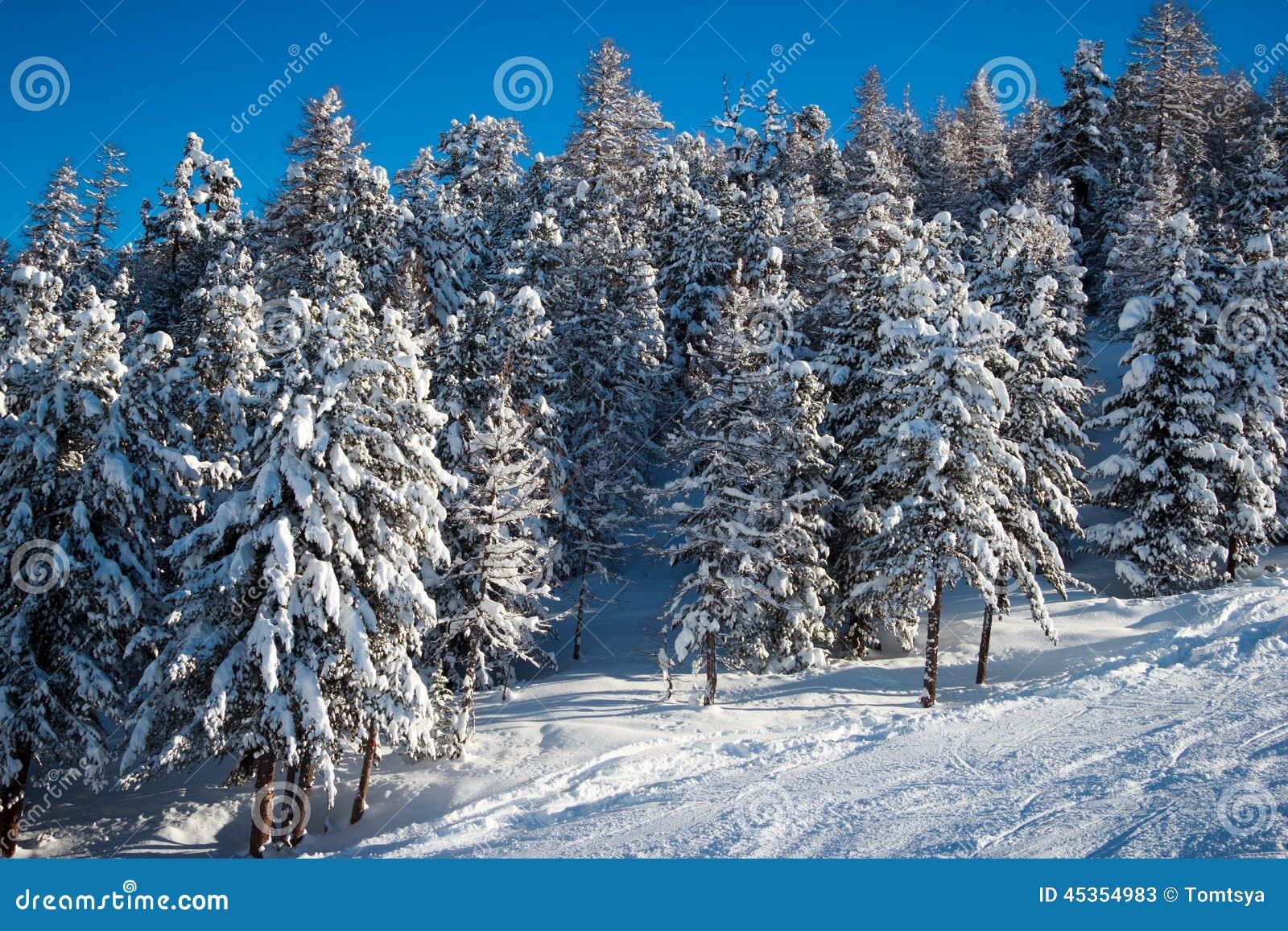 Sapins dans l horaire d hiver dans les Alpes