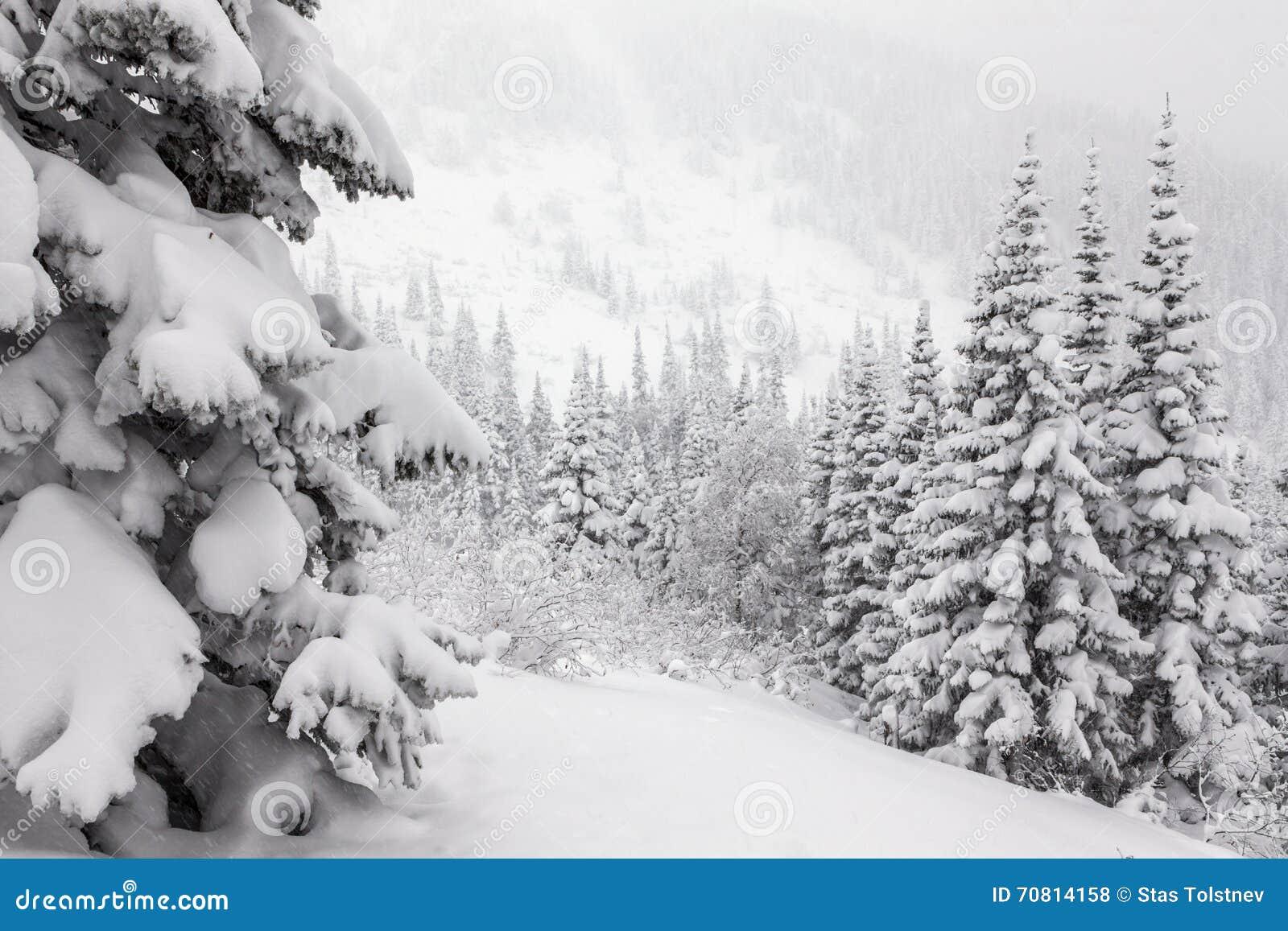 Sapins sous la neige photo stock image du imagination - Photos de neige gratuites ...