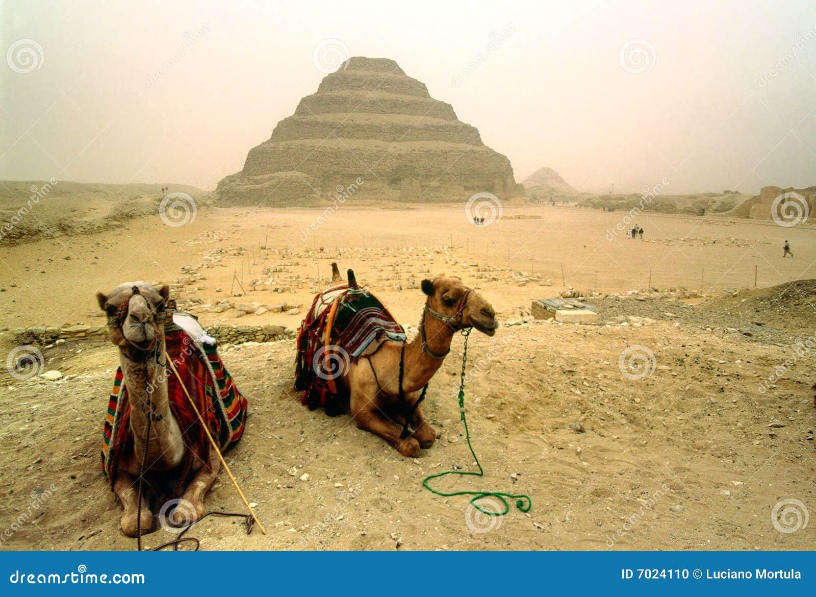 Saqqara, Egypt.